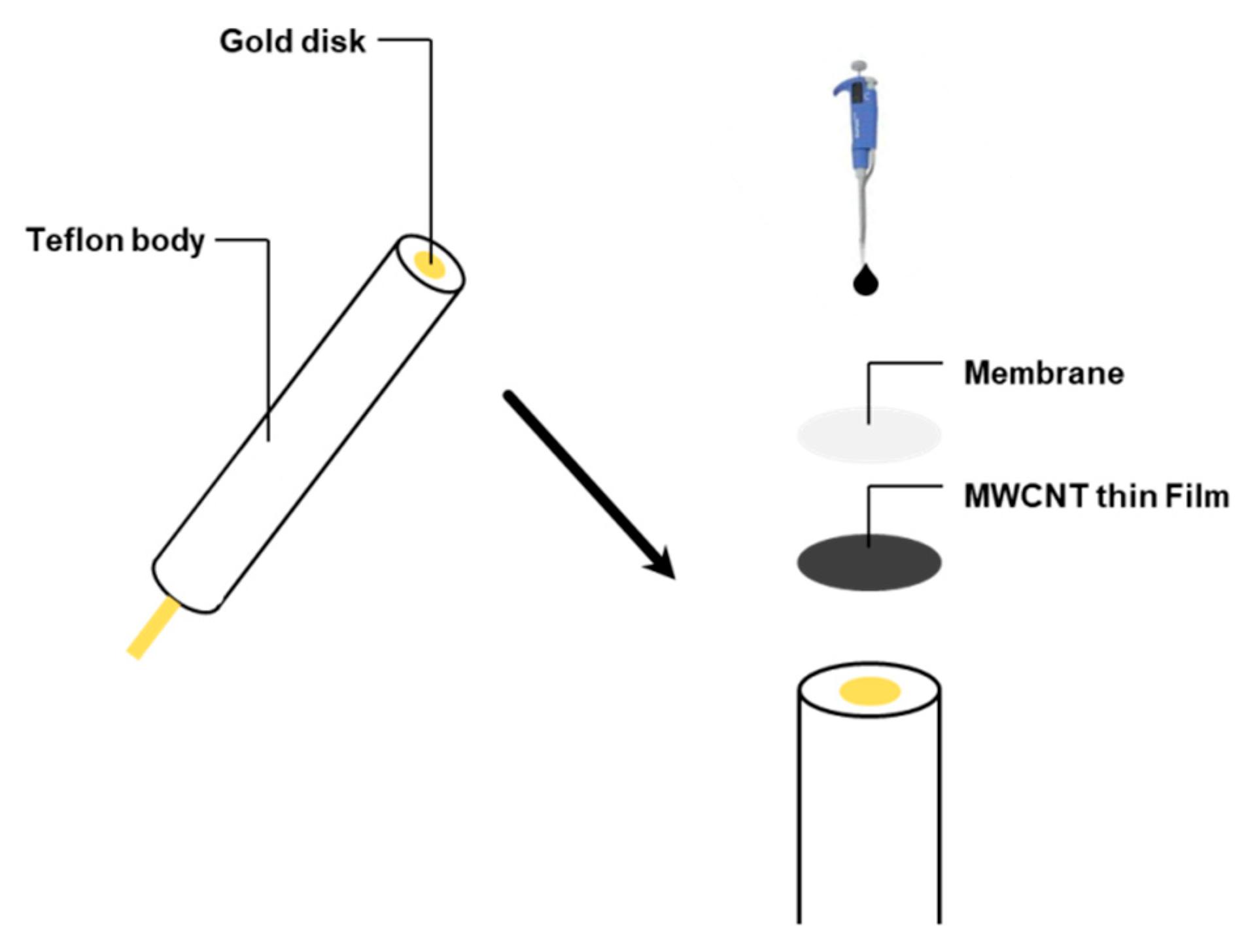 3mm gold electrode gold plate electrode gold disc electrode Laliva The gold electrode flat
