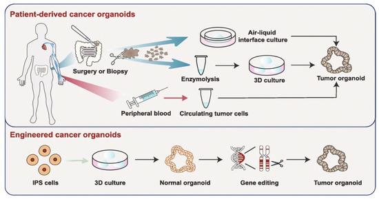 Nanomaterials 10 01671 g010 550