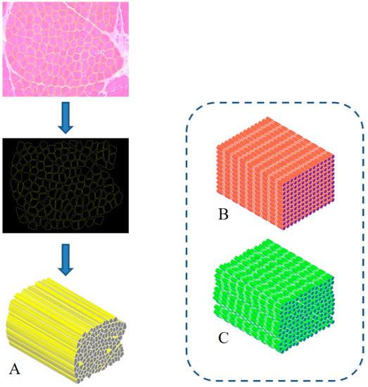 Nanomaterials 10 01986 g001 550