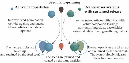 Nanomaterials 11 00267 g003 550