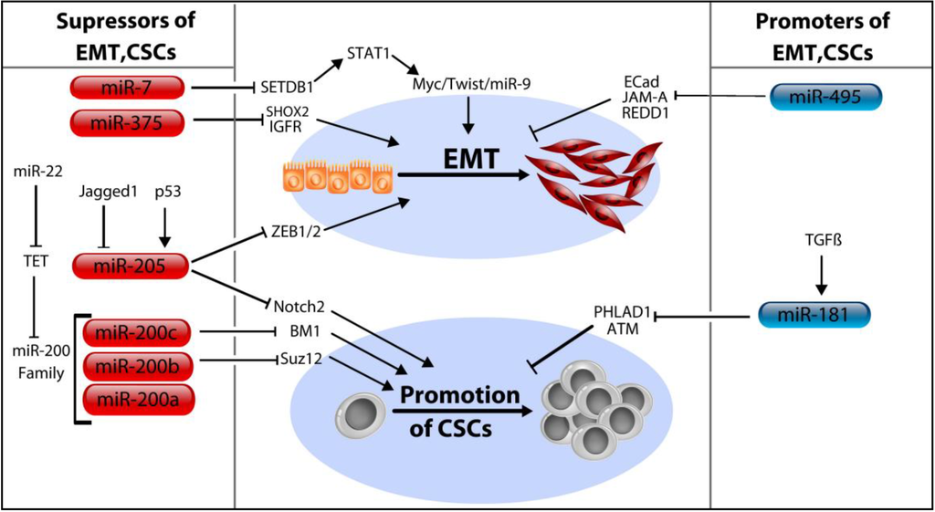 role of microrna in breast cancer Signaling by exosomal micrornas in cancer  lv l, wei l, et al microrna-21 regulates breast cancer  the inhibitory role of mir-29 in growth of breast cancer.