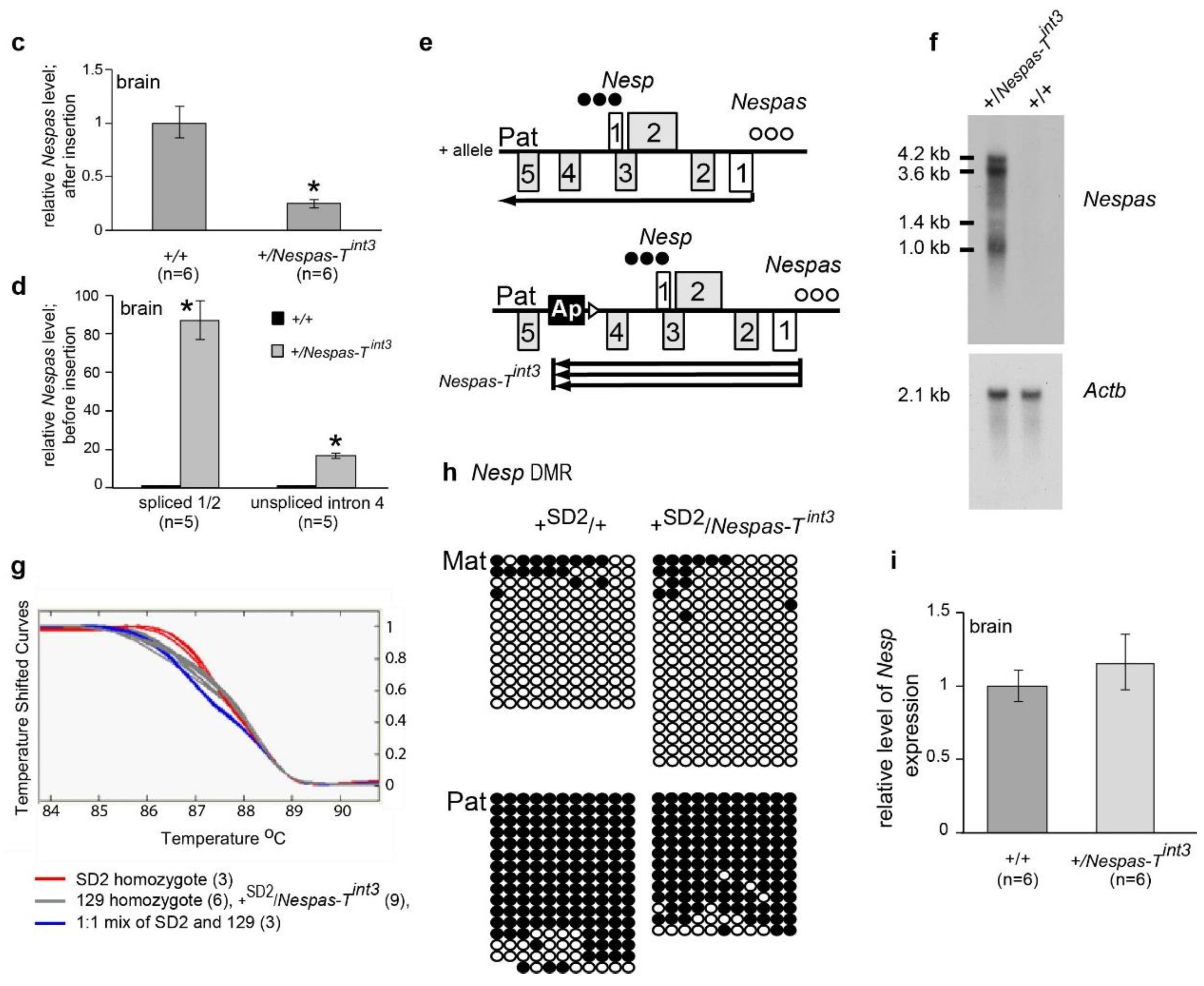 ncRNA | Free Full-Text | Antisense Activity across the Nesp Promoter ...