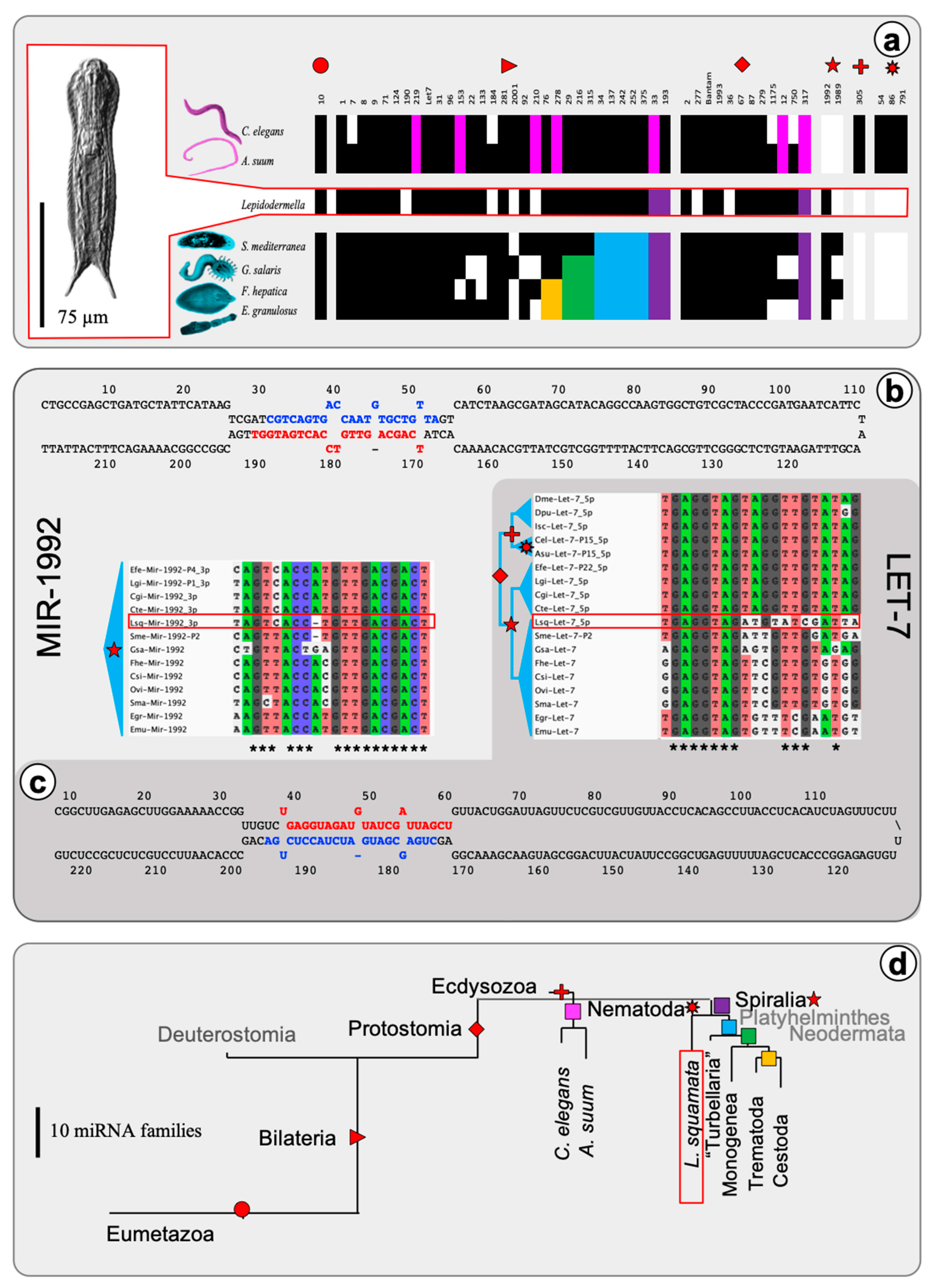 ncRNA | Free Full-Text | Evolutionary Implications of the microRNA