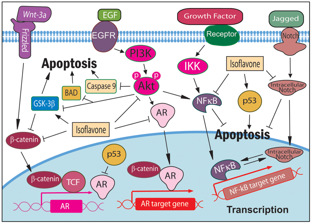apoptosis research paper Apoptosis - lab report example apoptosis is a morphologically distinct form of cell death which is under genetic research paper discussion part satraplatin.
