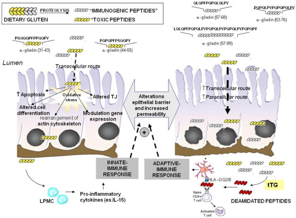Ap Biology Blog November 2014
