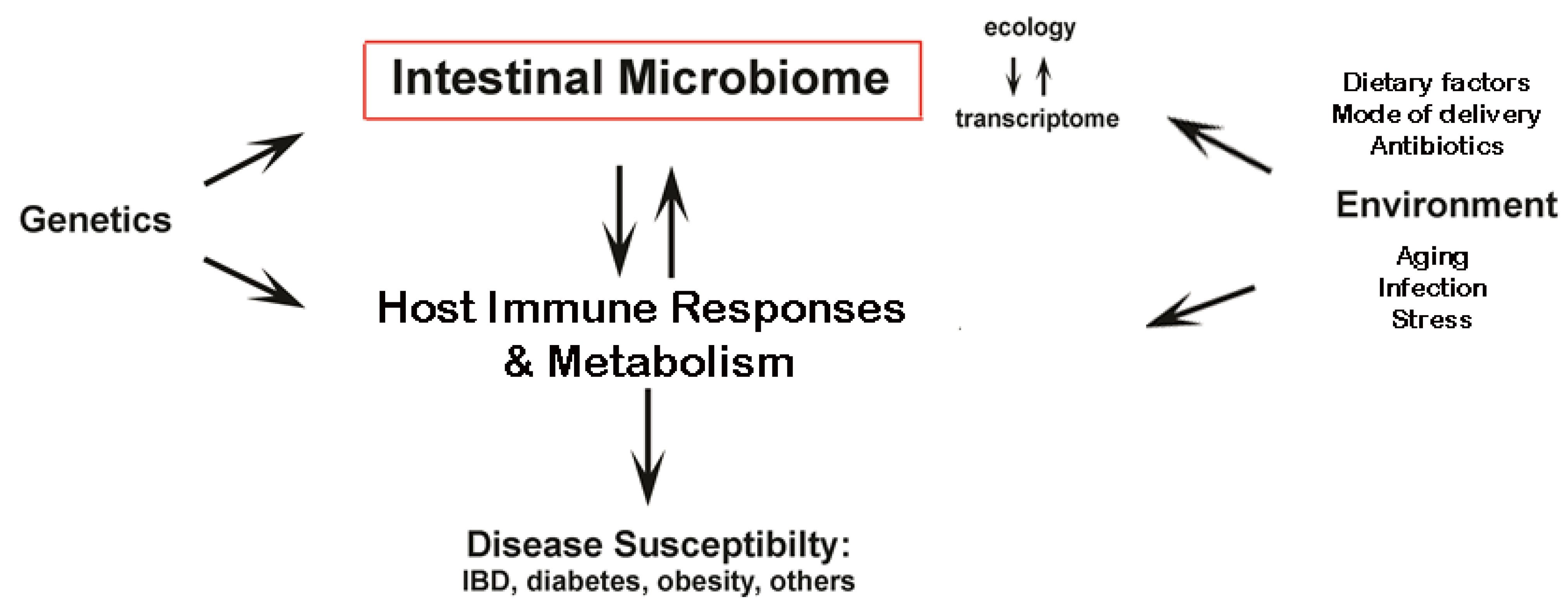 obesity alters gut microbial ecology essay Gut microbiota and obesity authors papers of particular lozupone ca, knight rd, gordon ji obesity alters gut microbial ecology proc natl acad sci usa.