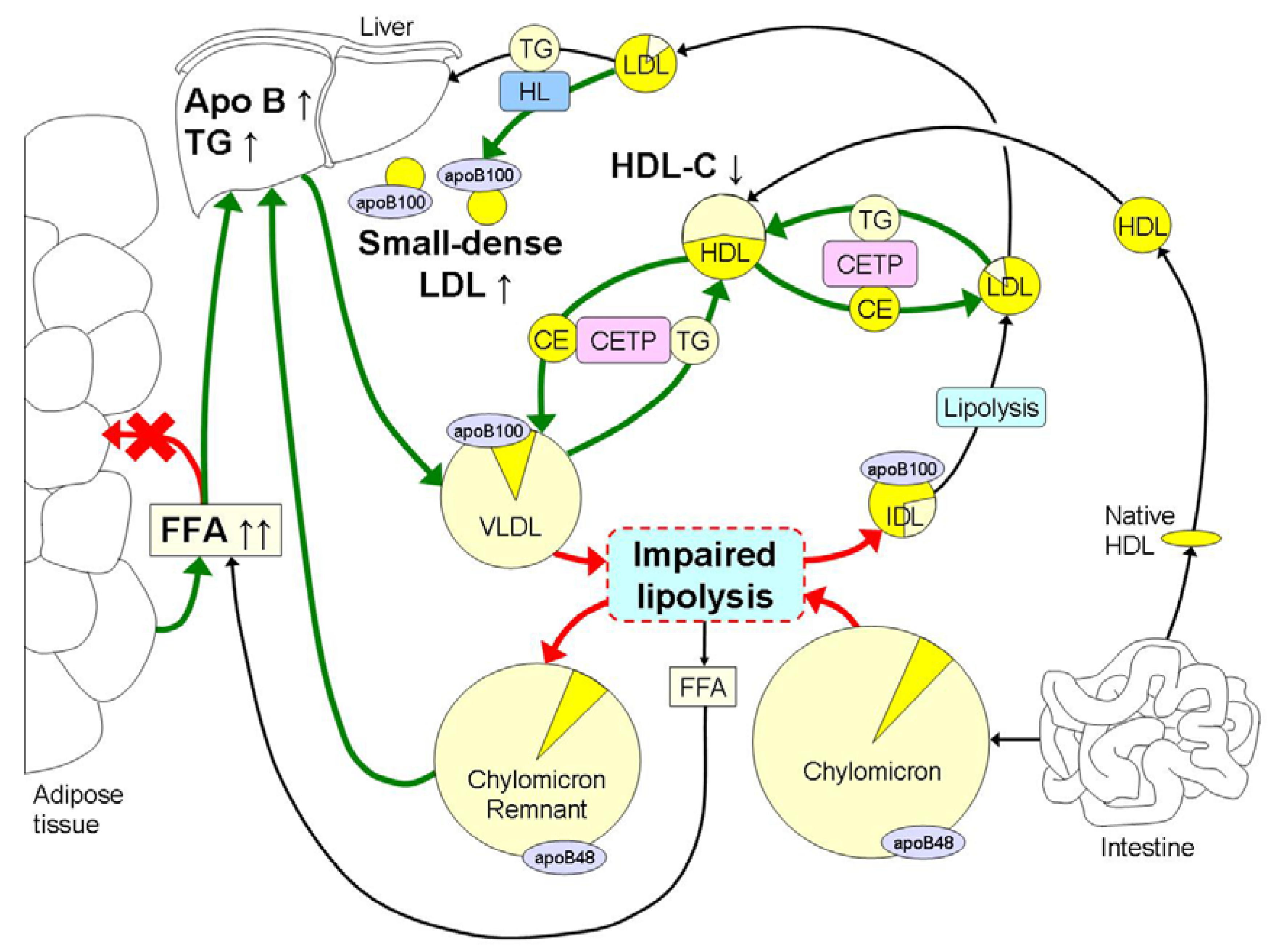 Nutrients | Free Full-Text | Dyslipidemia in Obesity: Mechanisms and