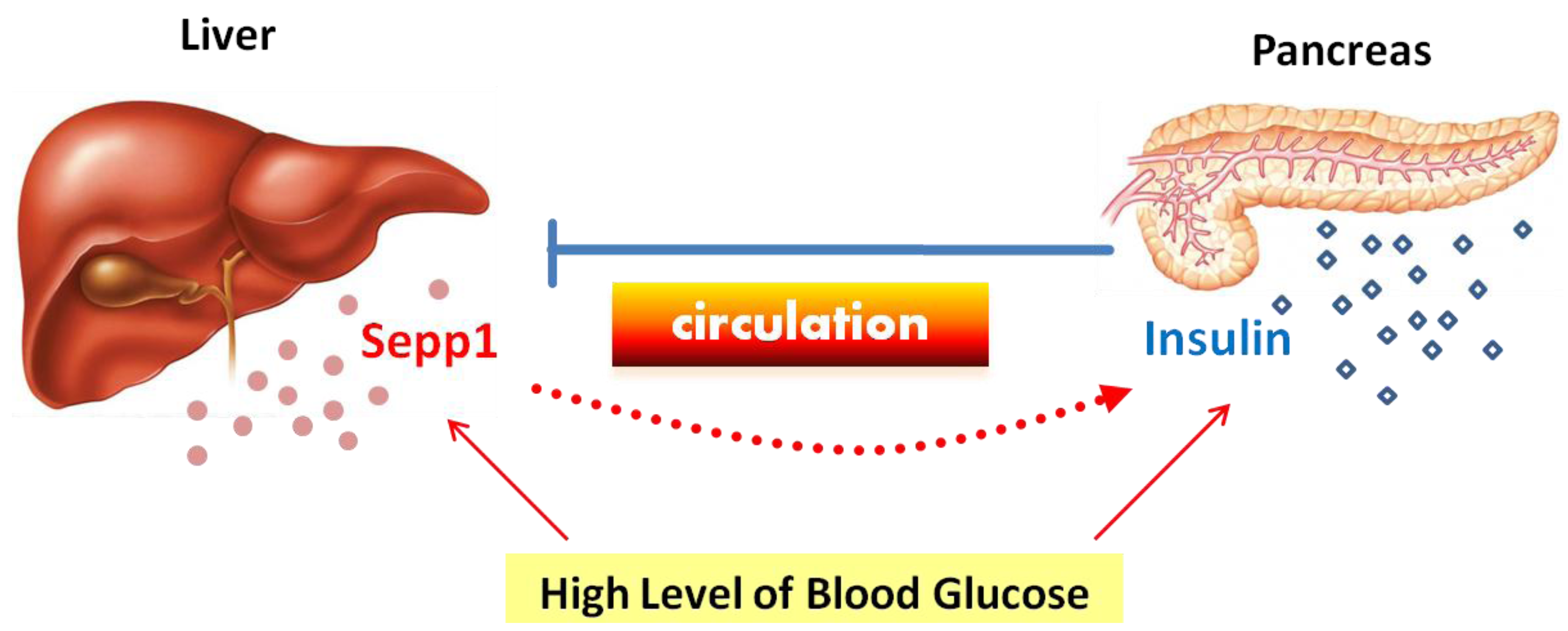 what is the relationship between glucose and