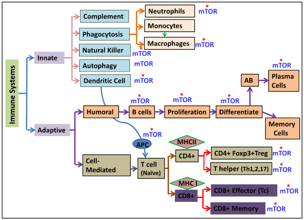 Nutrients Free Full Text The Role Of Mechanistic Target Of