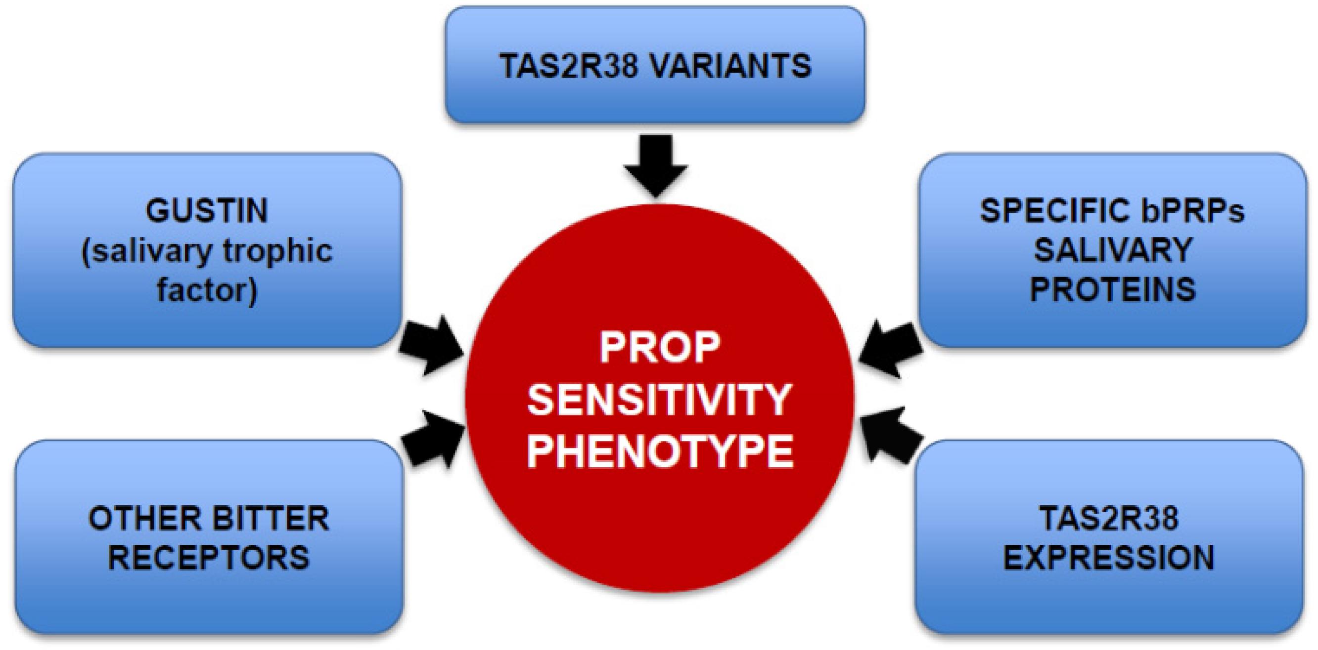Nutrients Free Full Text Genetic Sensitivity To The Bitter Taste Salt Taster Circuit 06 03363 G001 1024