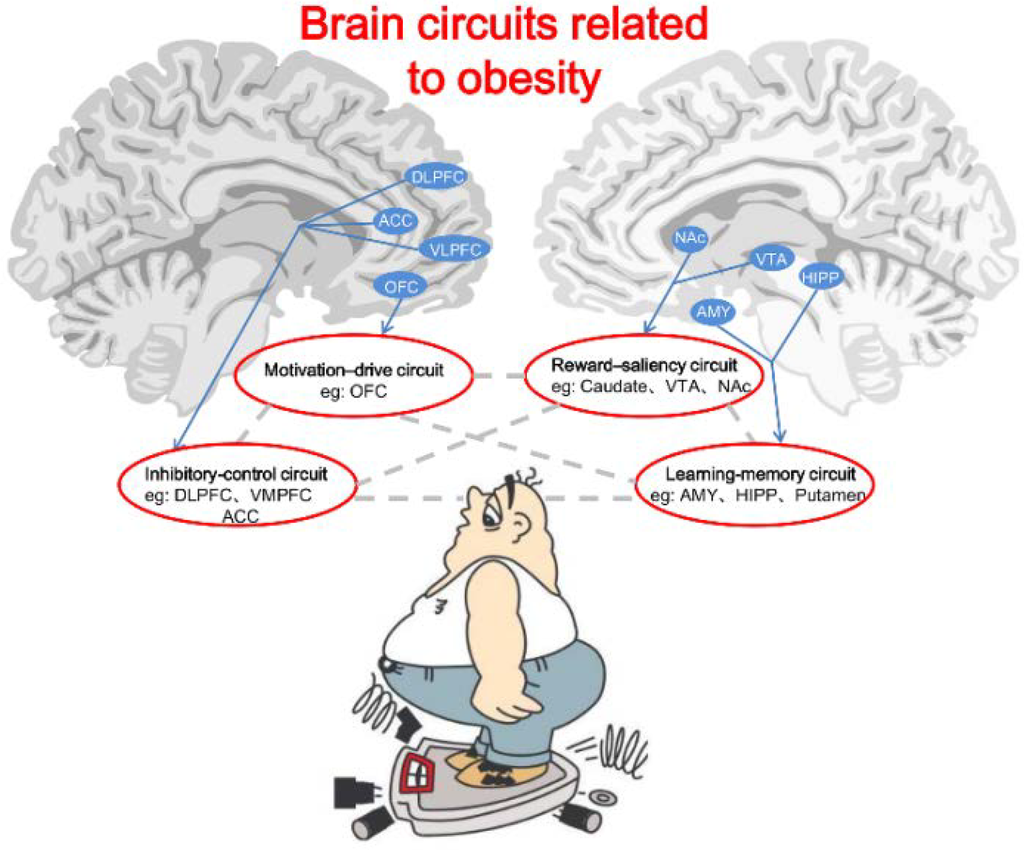 Obesity Leads to Loss in Brain Function