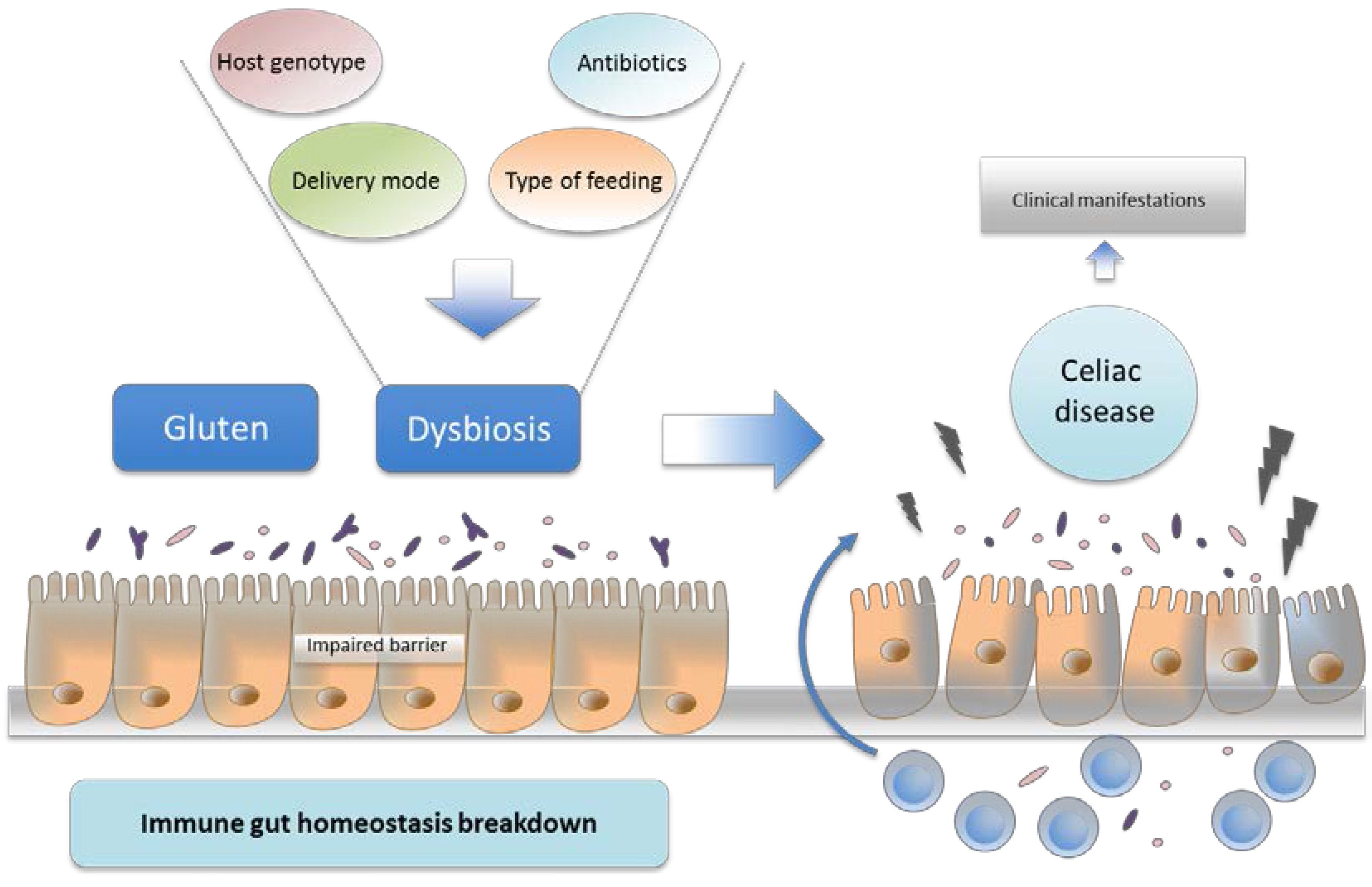 Nutrients | Free Full-Text | Intestinal Microbiota and