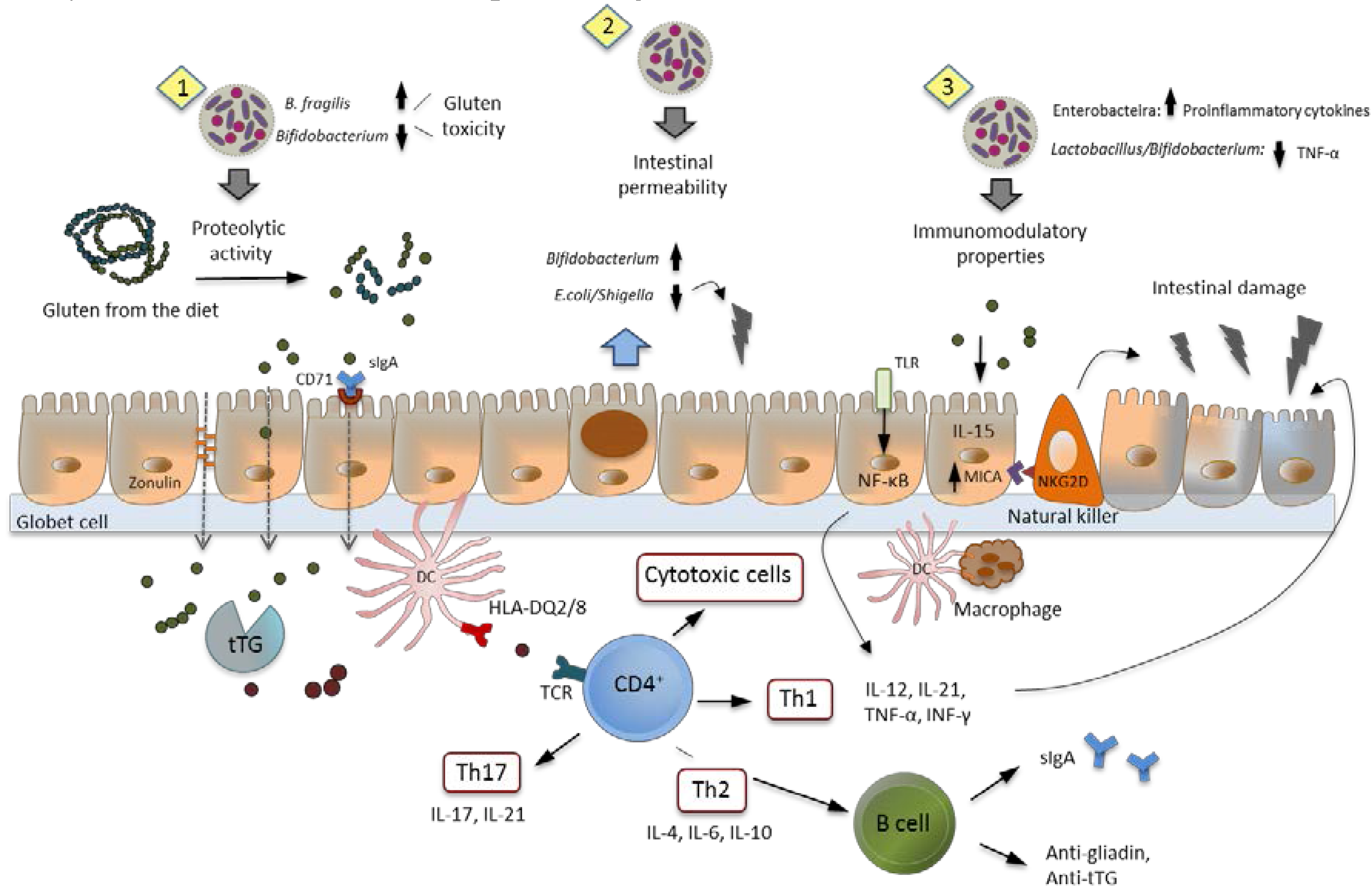 Nutrients Free Full Text Intestinal Microbiota And