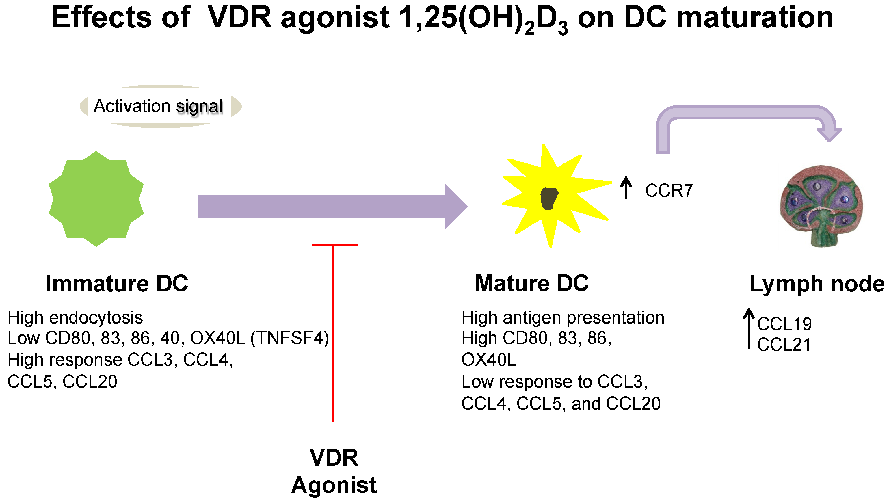 Nutrients   Free Full-Text   Regulation of Dendritic Cell