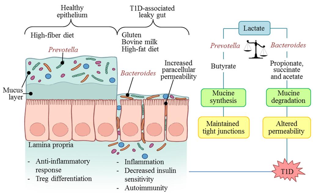propionate gut