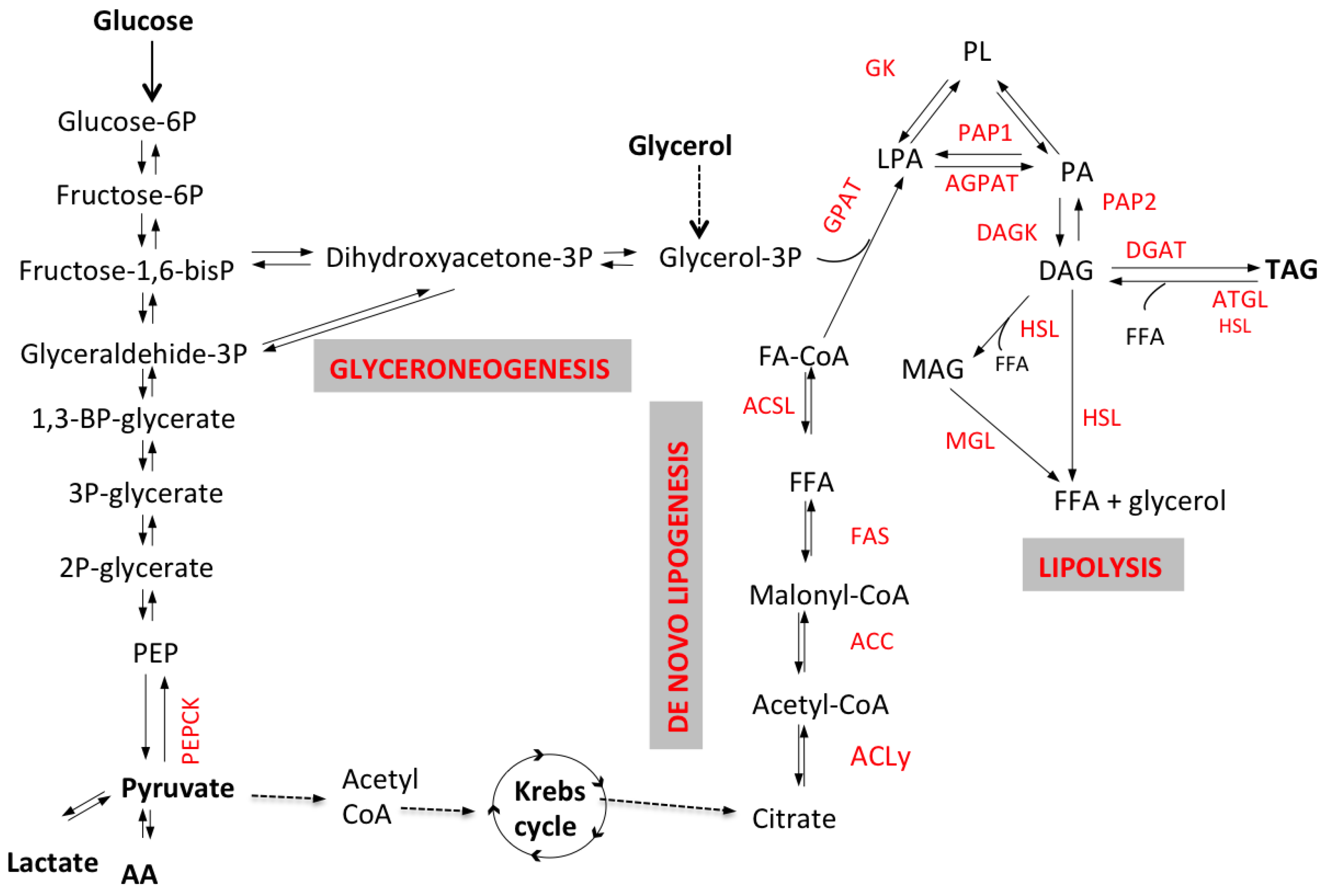 schematic representation of glycolysis with Htm on Schematic Diagram Of Relay Module besides Schematic Representation Of Glycolysis moreover Detailedresult php likewise Full as well Mito Id Extracellular O2 Sensor Kit High Sensitivity.