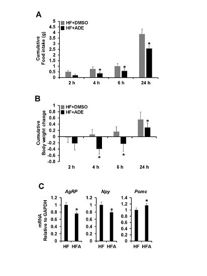 Nutrients Free Full Text Allomyrina Dichotoma Larvae Regulate Food Intake And Body Weight In High Fat Diet Induced Obese Mice Through Mtor And Mapk Signaling Pathways Html