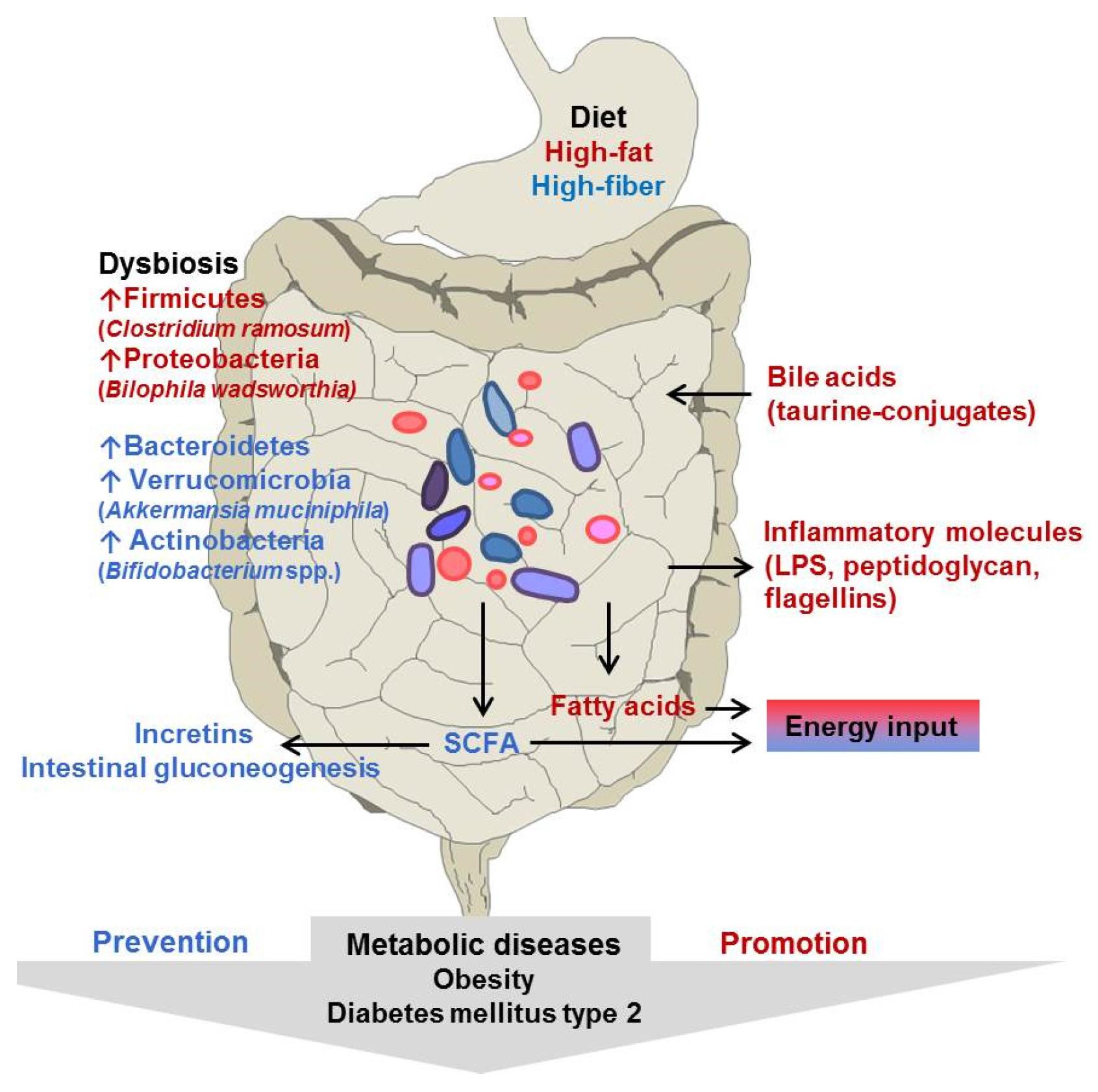 propionate obesity
