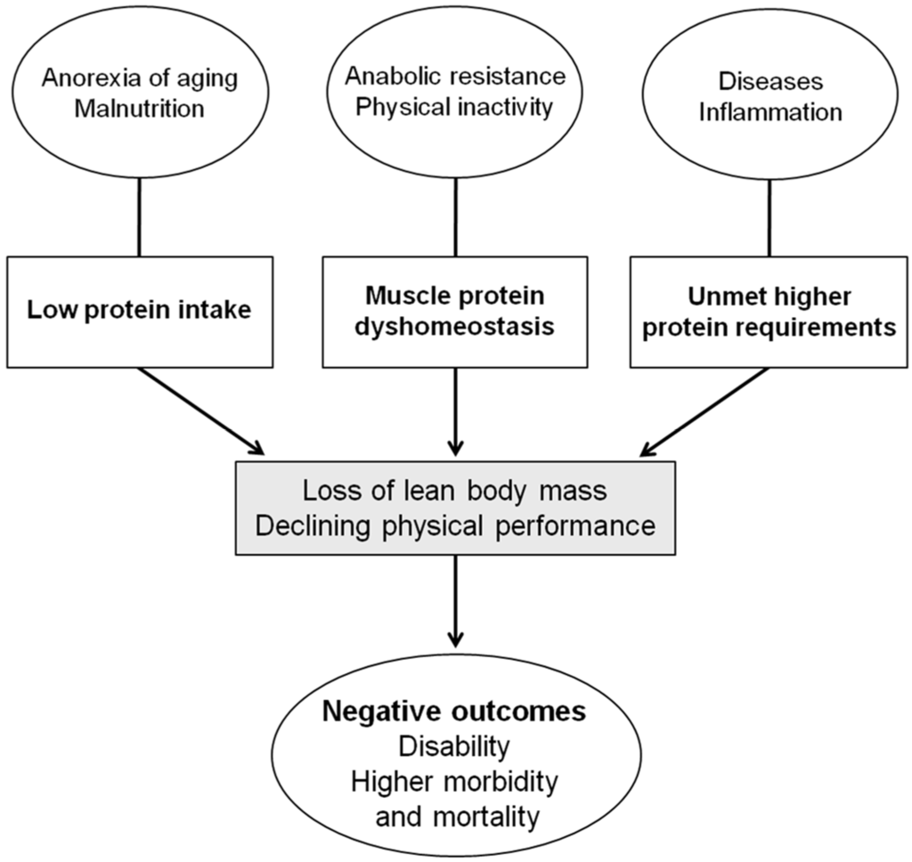 Todays Challenges For Crucial Aspects Of Weightlifting: Protein Intake And Muscle
