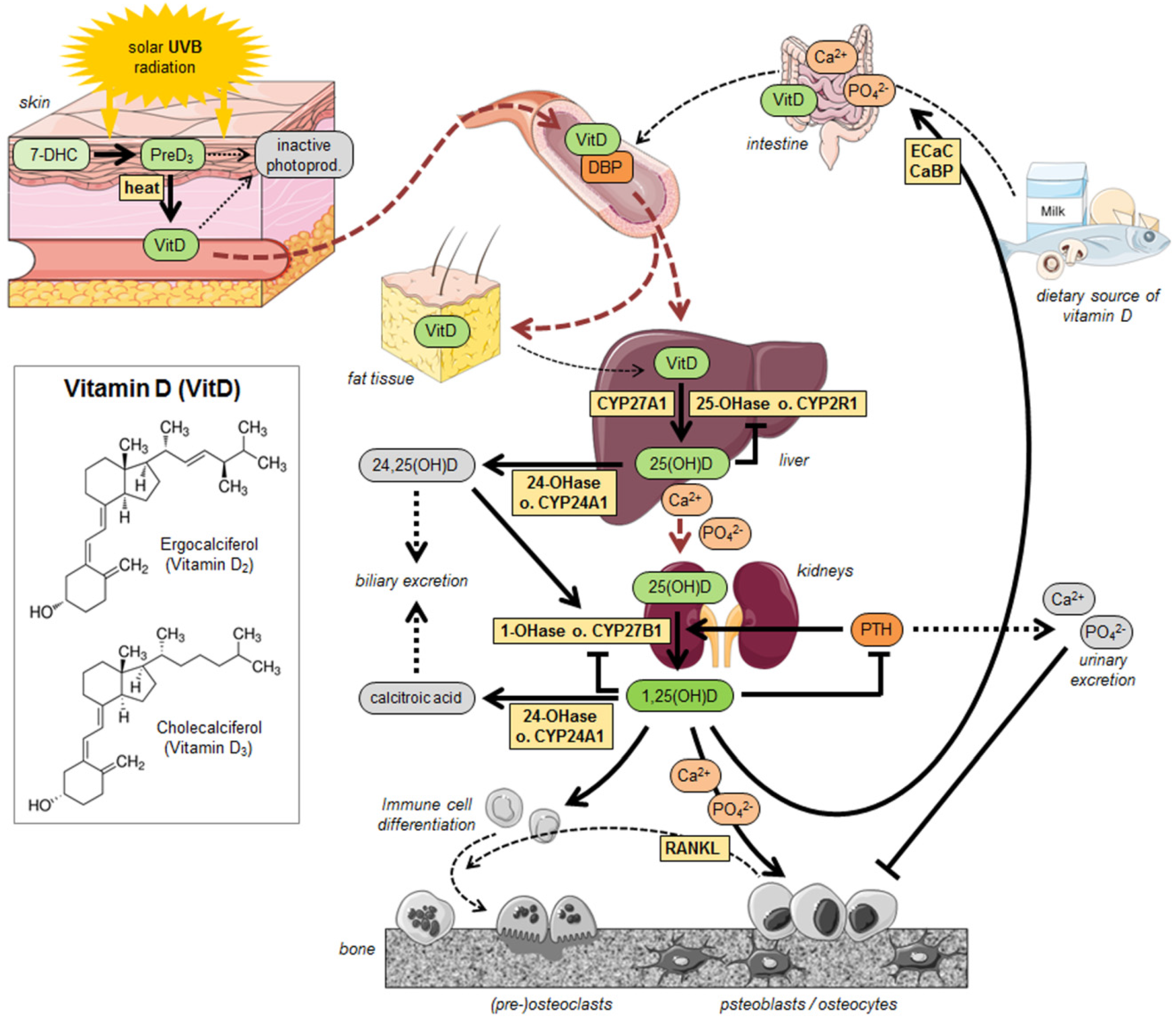 Nutrients | Free Full-Text | Crucial Role of Vitamin D in the