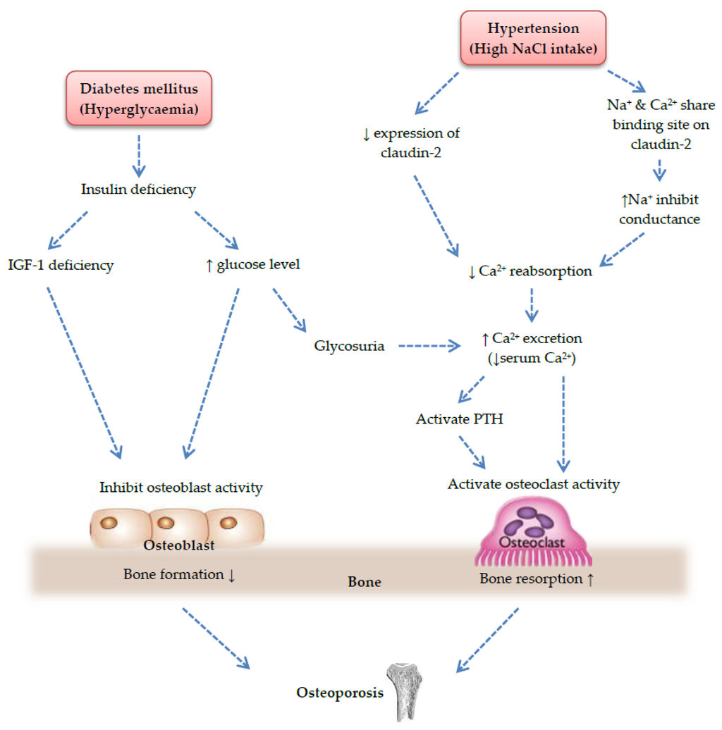 relationship between metabolic syndrome and diabetes mellitus