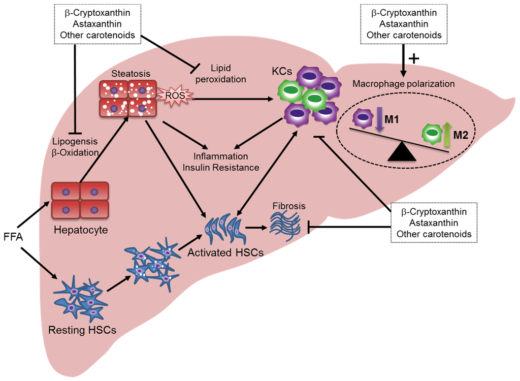 relationship between oxidation and inflammation