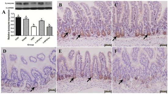Effects of n-3 PUFAs on Intestinal Mucosa Innate Immunity and Intestinal Microbiota in Mice after Hemorrhagic Shock Resuscitation