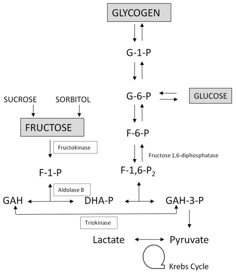 fructose 1 6 bisphosphatase fbpase deficiency Abstract: fructose 1,6-bisphosphatase (fbpase) deficiency is a rare disease   fbpase deficiency presented with episodic hypoglycemia and.