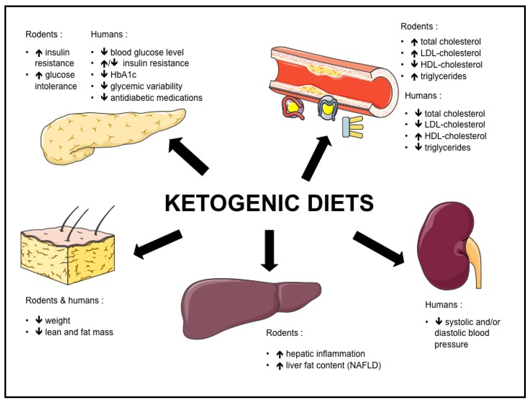 Nutrients | Free Full-Text | Effects of Ketogenic Diets on