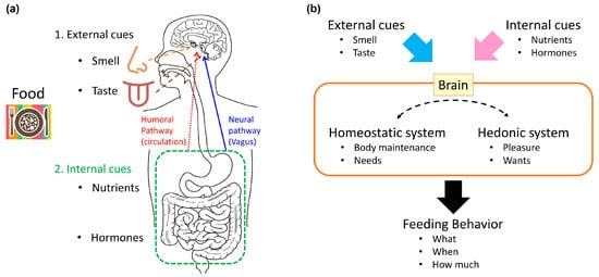 aterations in feeding behavior of female rats at varying reproductive phases of amygdala Stress, stress response, and health and suppression of sexual and feeding behaviors prange, aj jr oxytocin induces maternal behavior in virgin female rats.