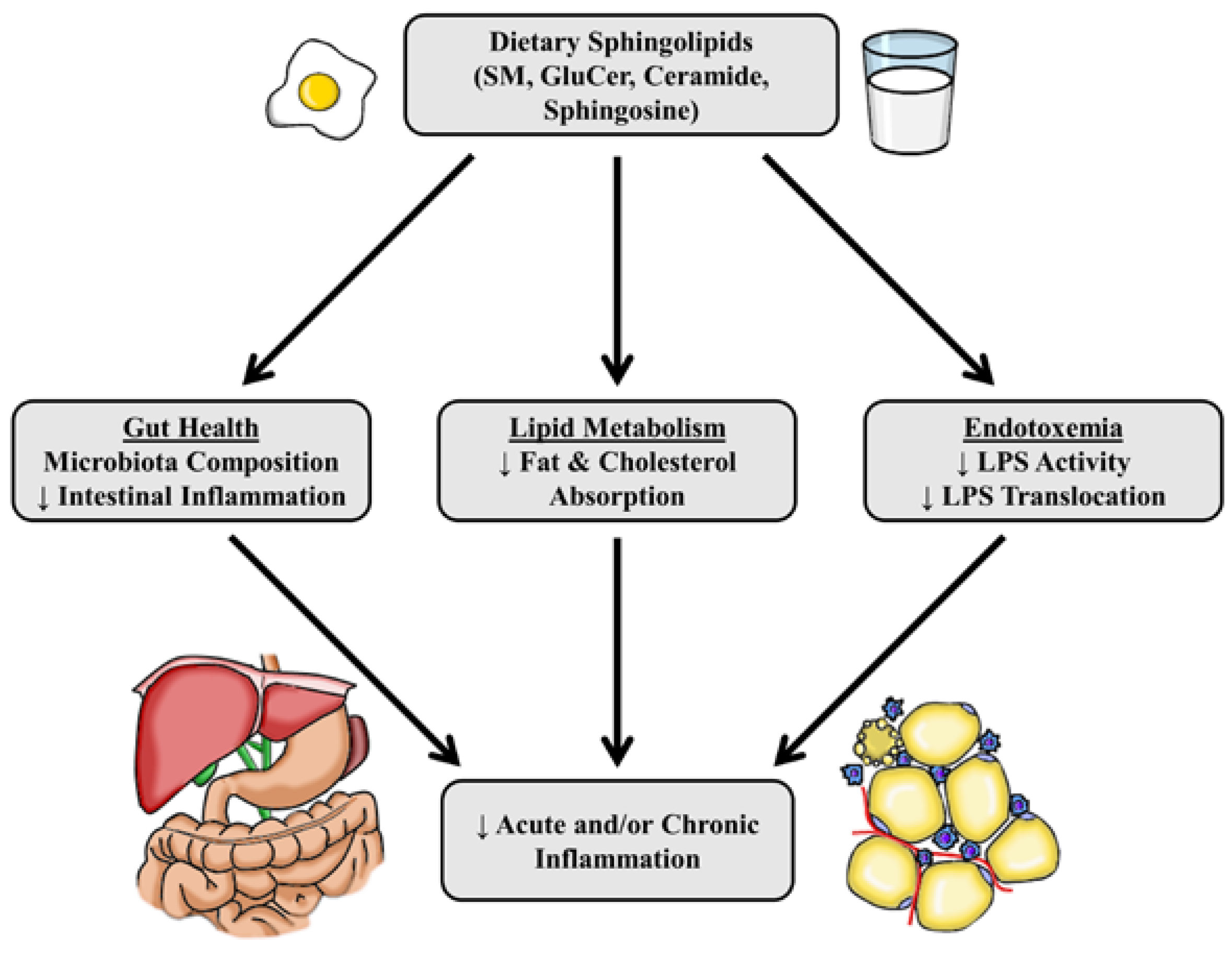 Nutrients | Free Full-Text | Dietary and Endogenous