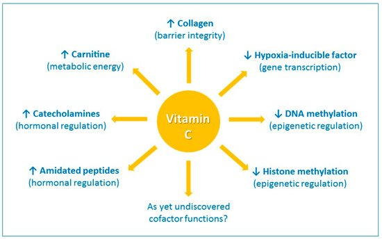 Nutrients | Free Full-Text | Vitamin C and Immune Function