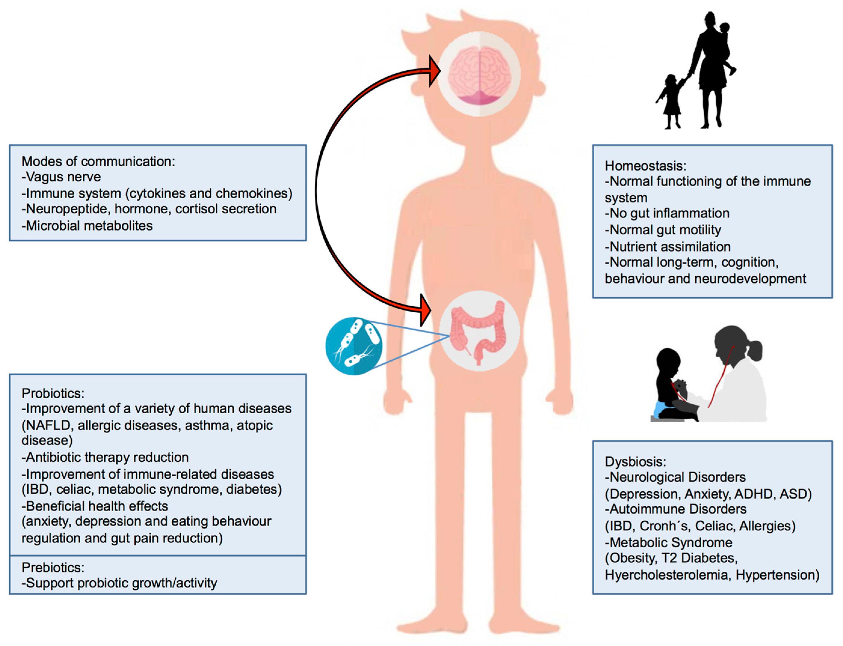 Brain Development Influenced By Immune >> Nutrients Free Full Text Probiotic Prebiotic And Brain Development