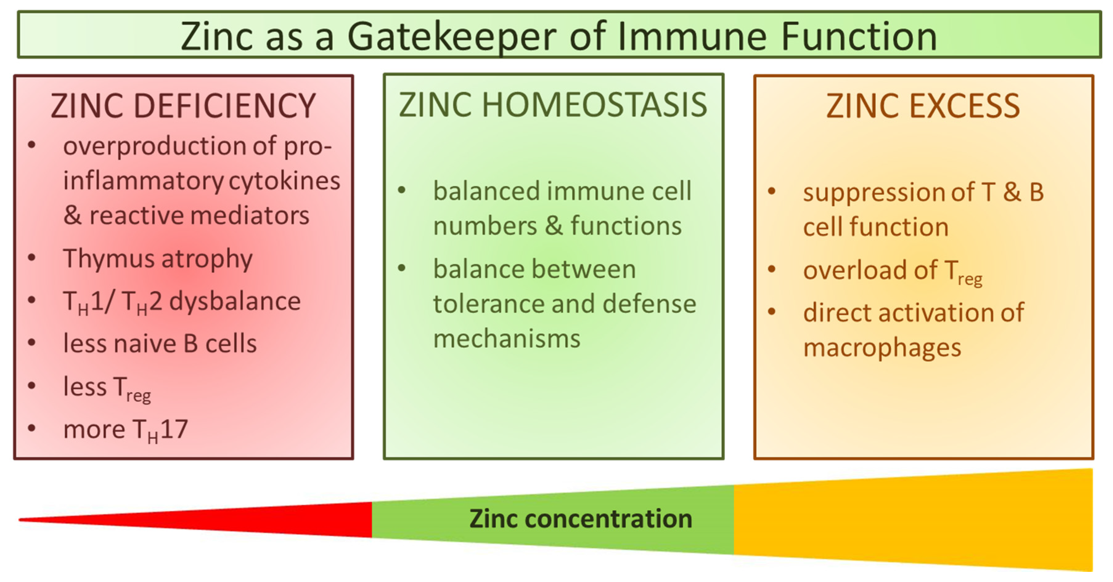 Nutrients Free Full Text Zinc As A Gatekeeper Of Immune Function