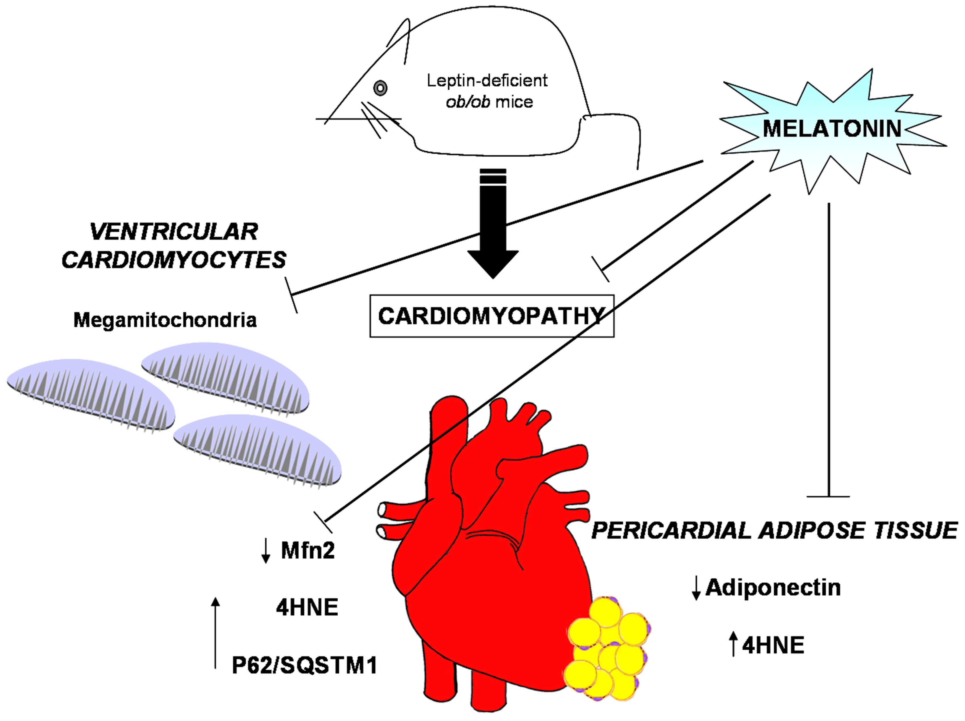 Mice Heart Diagram - Wiring Library •