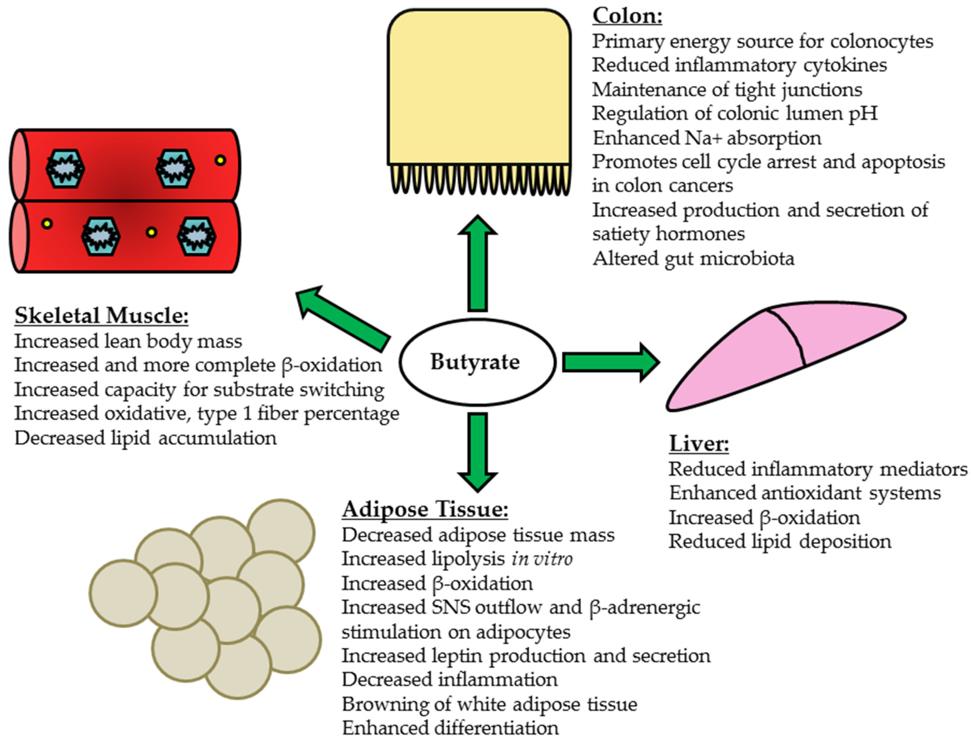 Nutrients Free Full Text Short Chain Fatty Acids In The Colon And Peripheral Tissues A Focus On Butyrate Colon Cancer Obesity And Insulin Resistance