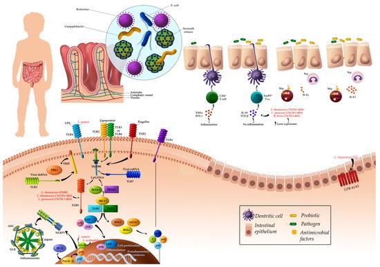 Immune-Mediated Mechanisms of Action of Probiotics and Synbiotics in Treating Pediatric Intestinal Diseases