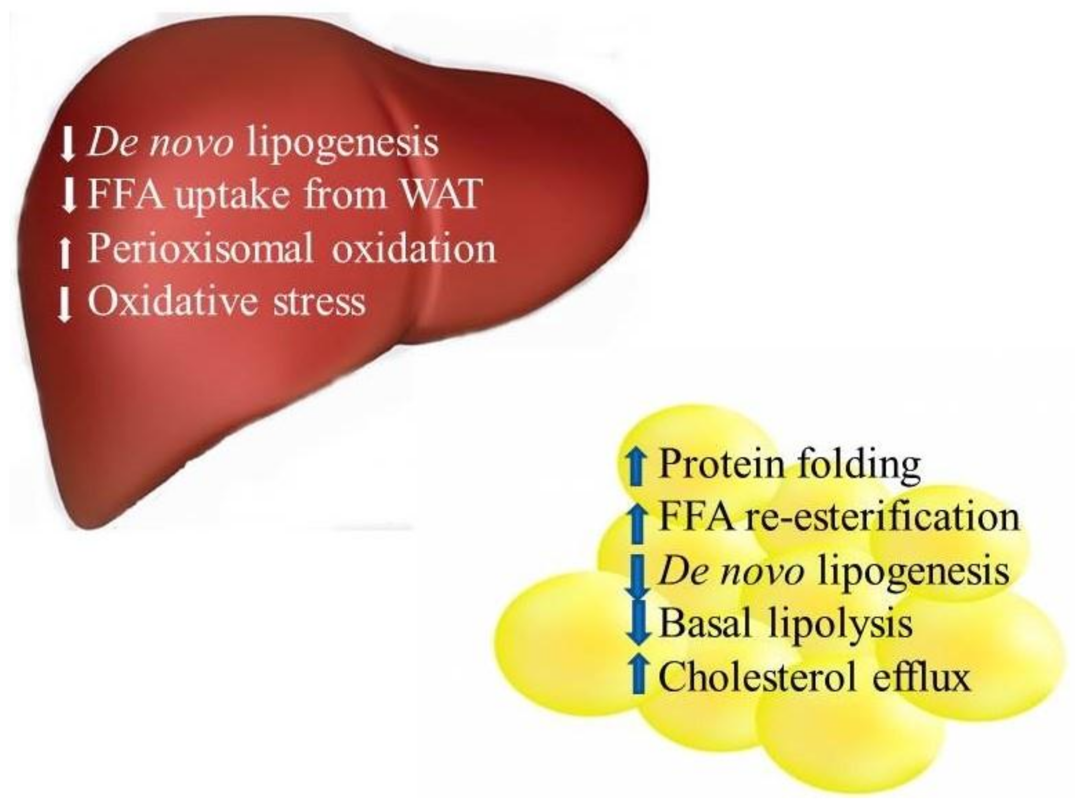 Nutrients Free Full Text Proteomic Profiles Of Adipose And Liver Potato Battery How To Turn Produce Into Veggie Power No
