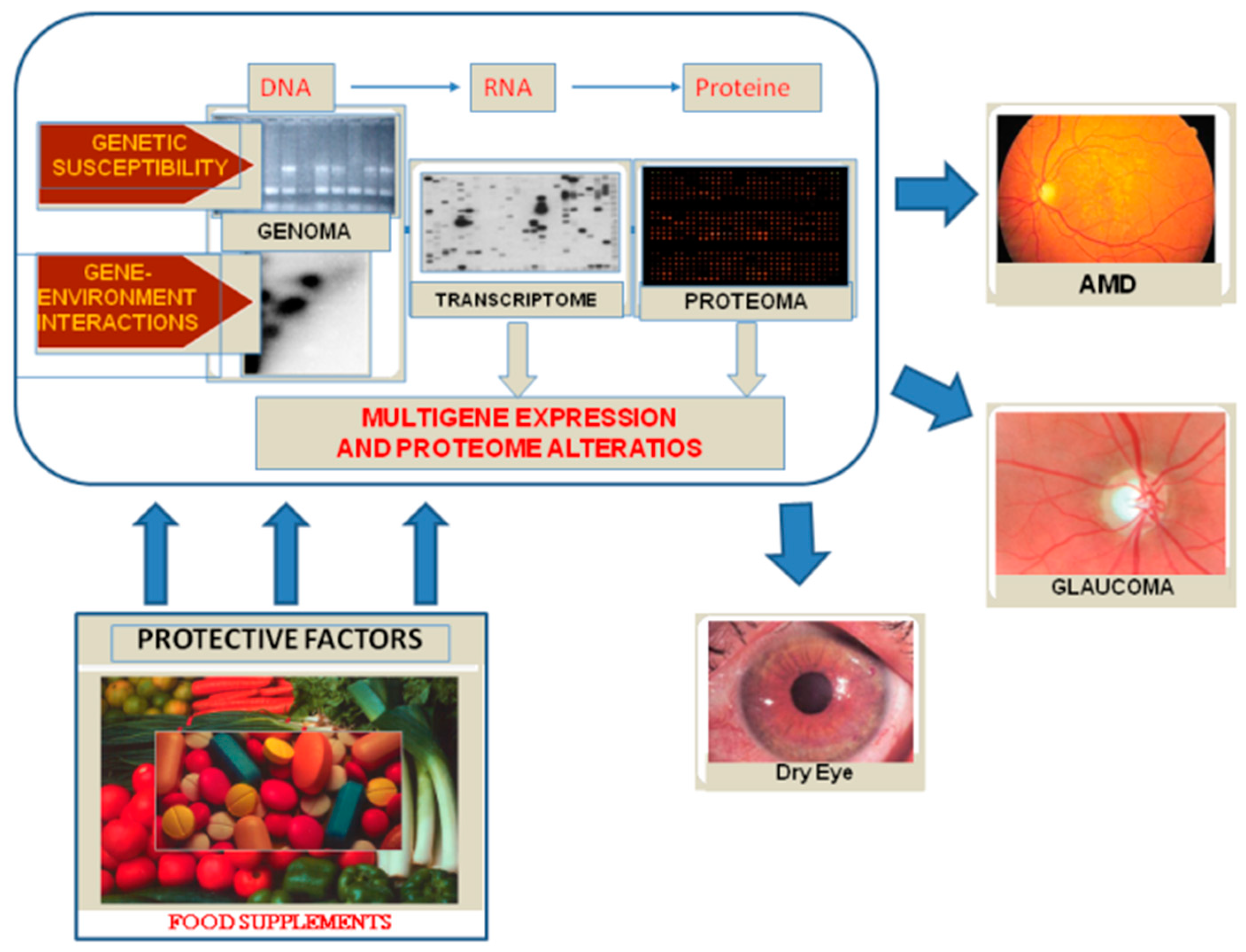 Nutrients | Free Full-Text | The Eye, Oxidative Damage and