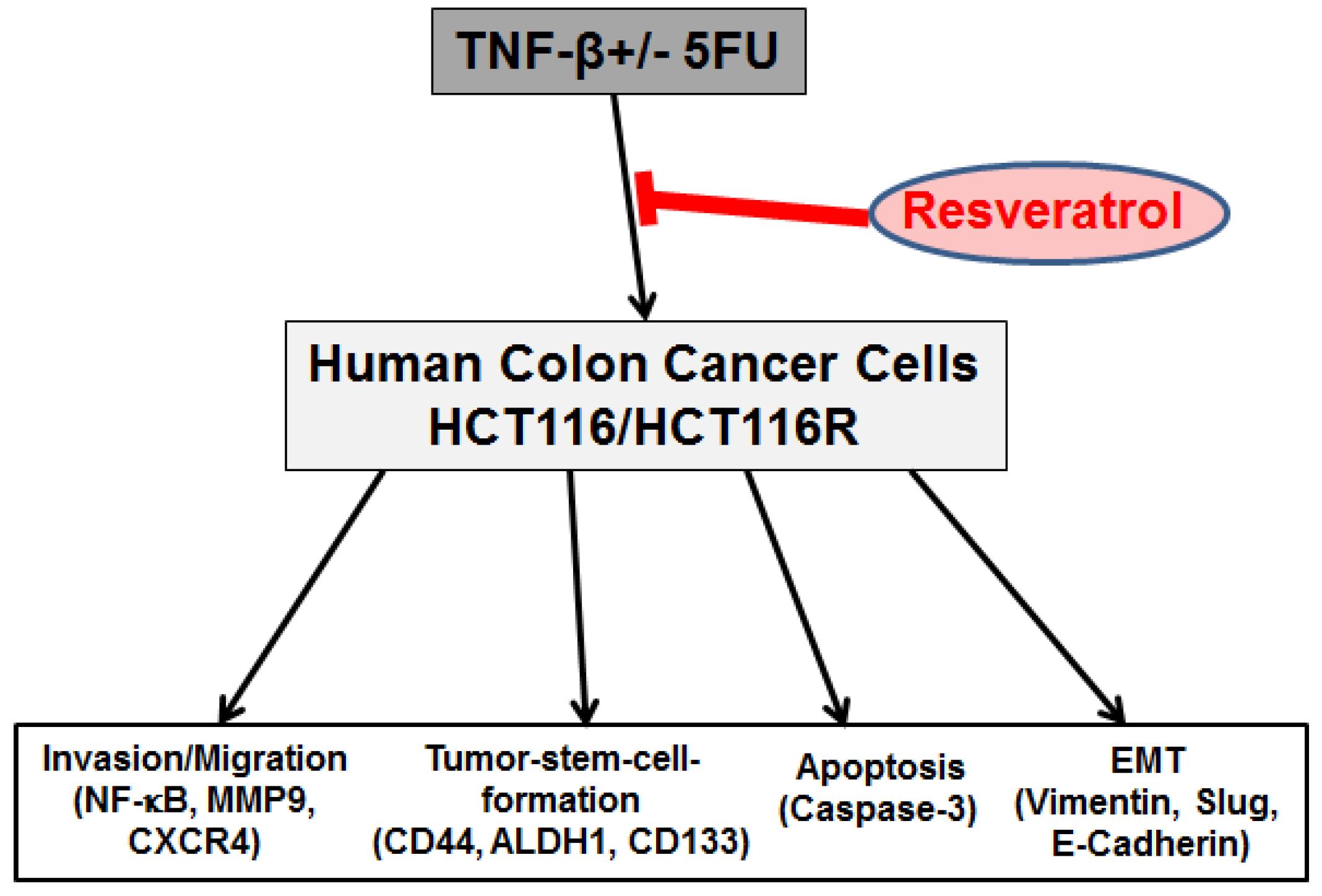 Nutrients | Free Full-Text | Resveratrol Chemosensitizes TNF-β ...