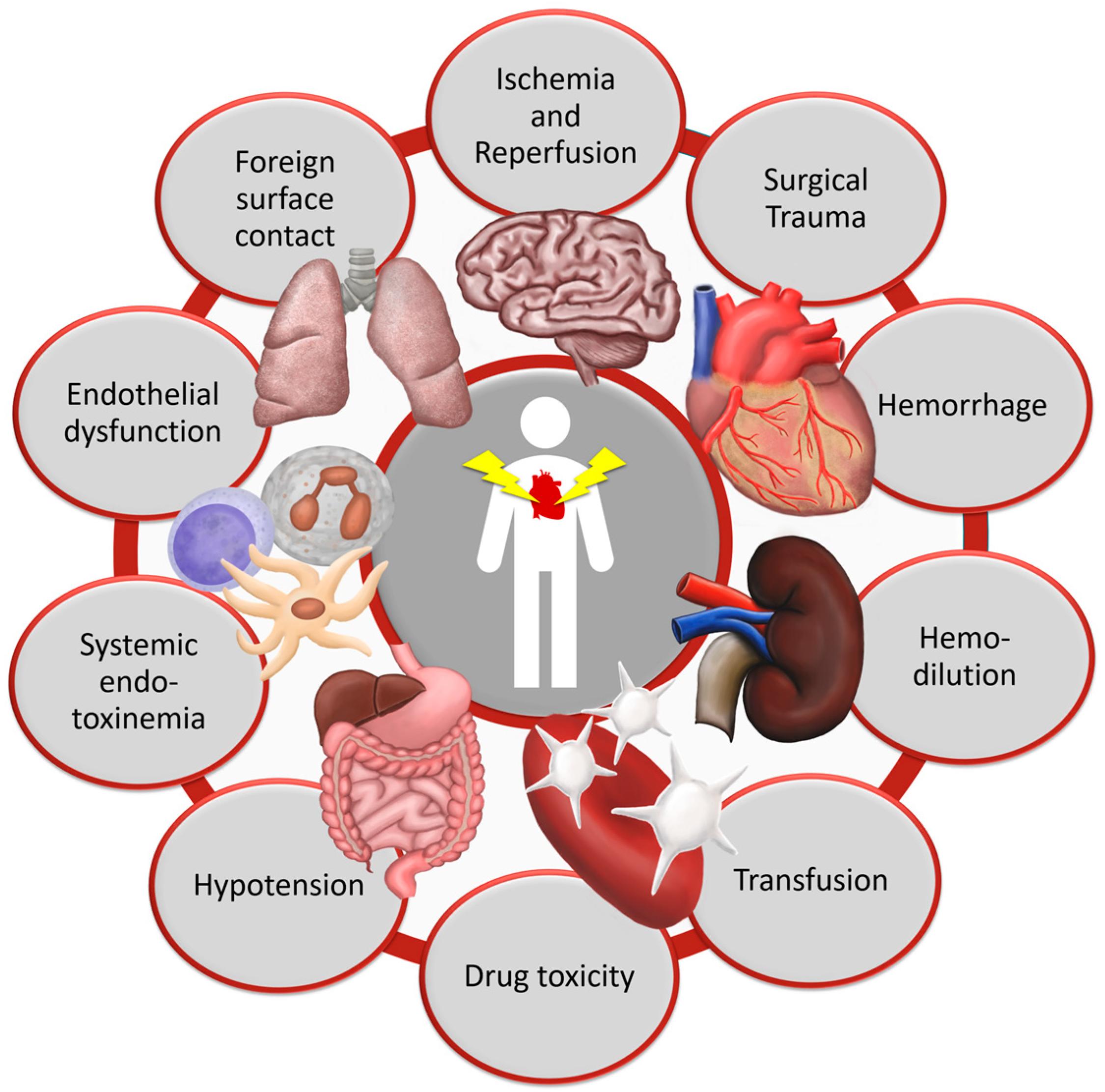 Nutrients | Free Full-Text | Vitamin C to Improve Organ ...