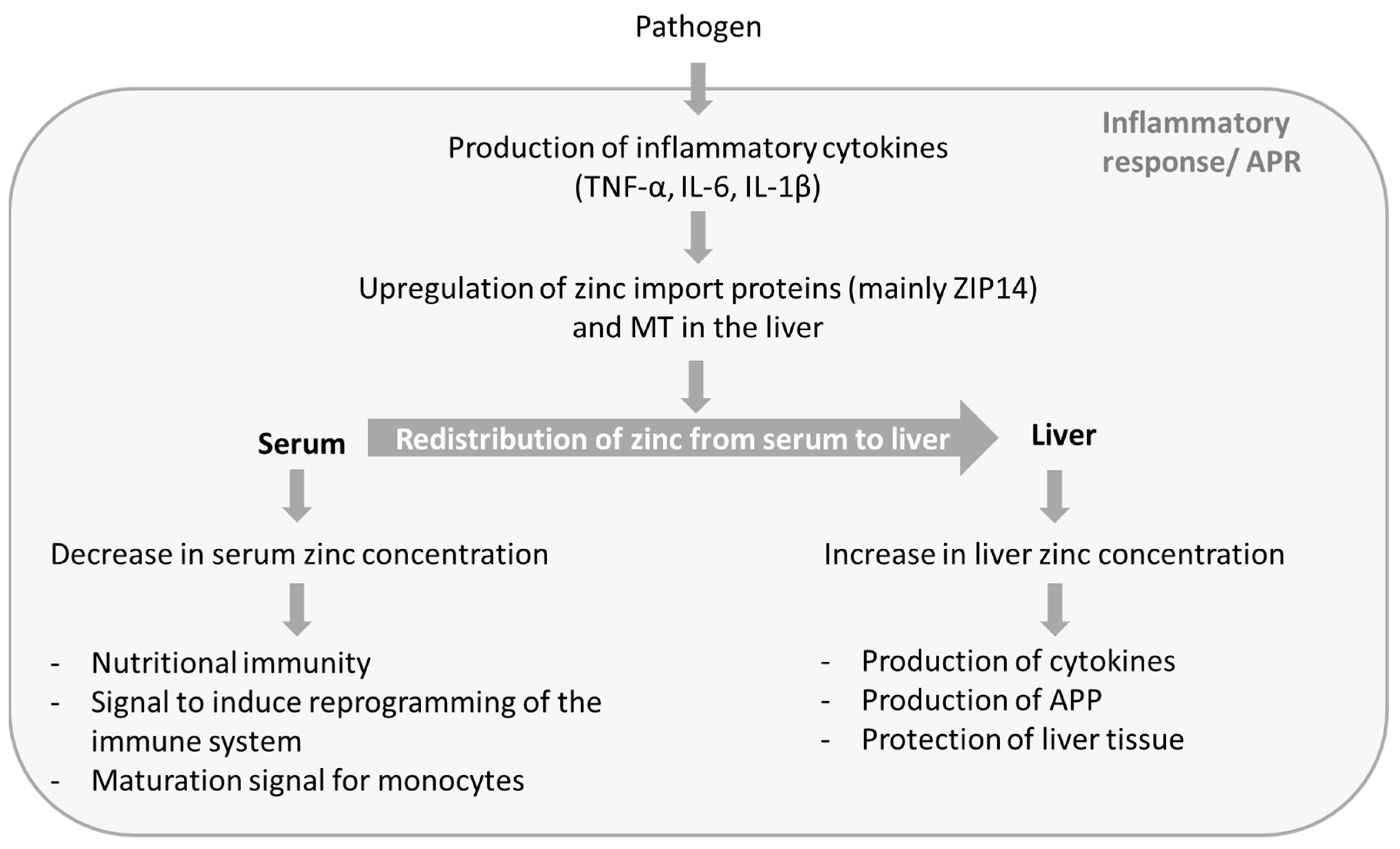 Nutrients Free Full Text Zinc And Sepsis