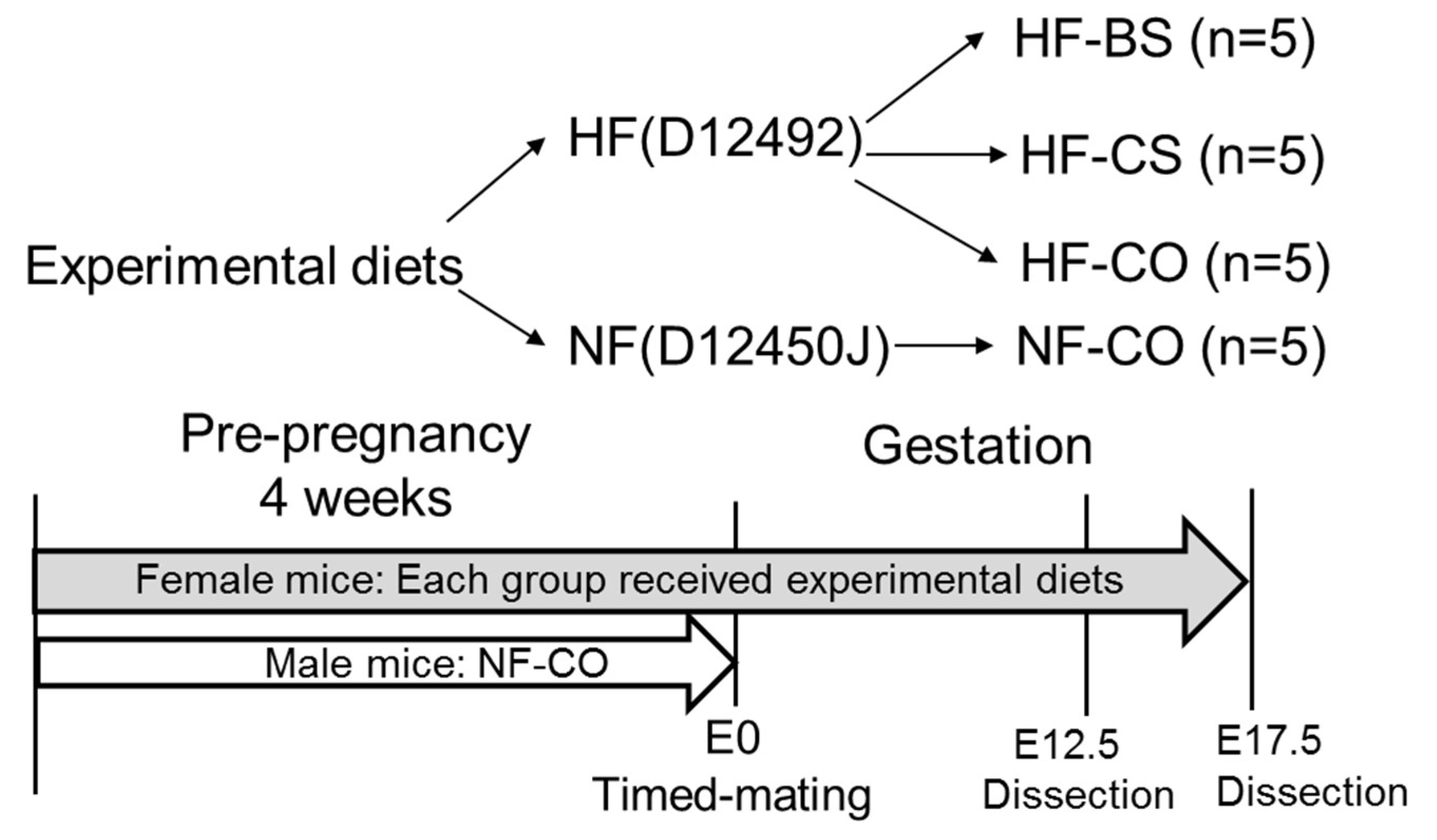 Nutrients   Free Full-Text   Maternal Choline and Betaine