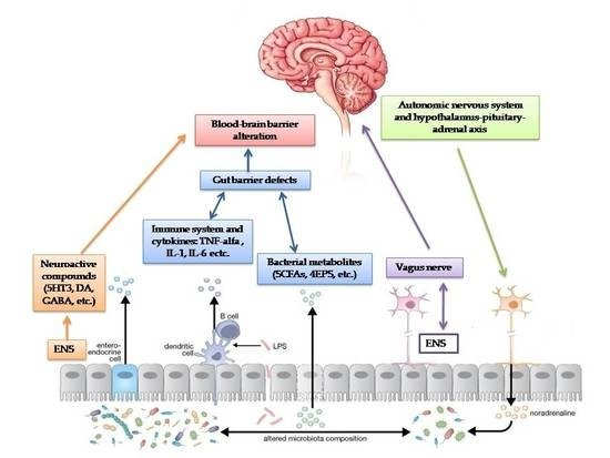 Nutrients Free Full Text Autism Spectrum Disorders And The Gut Microbiota