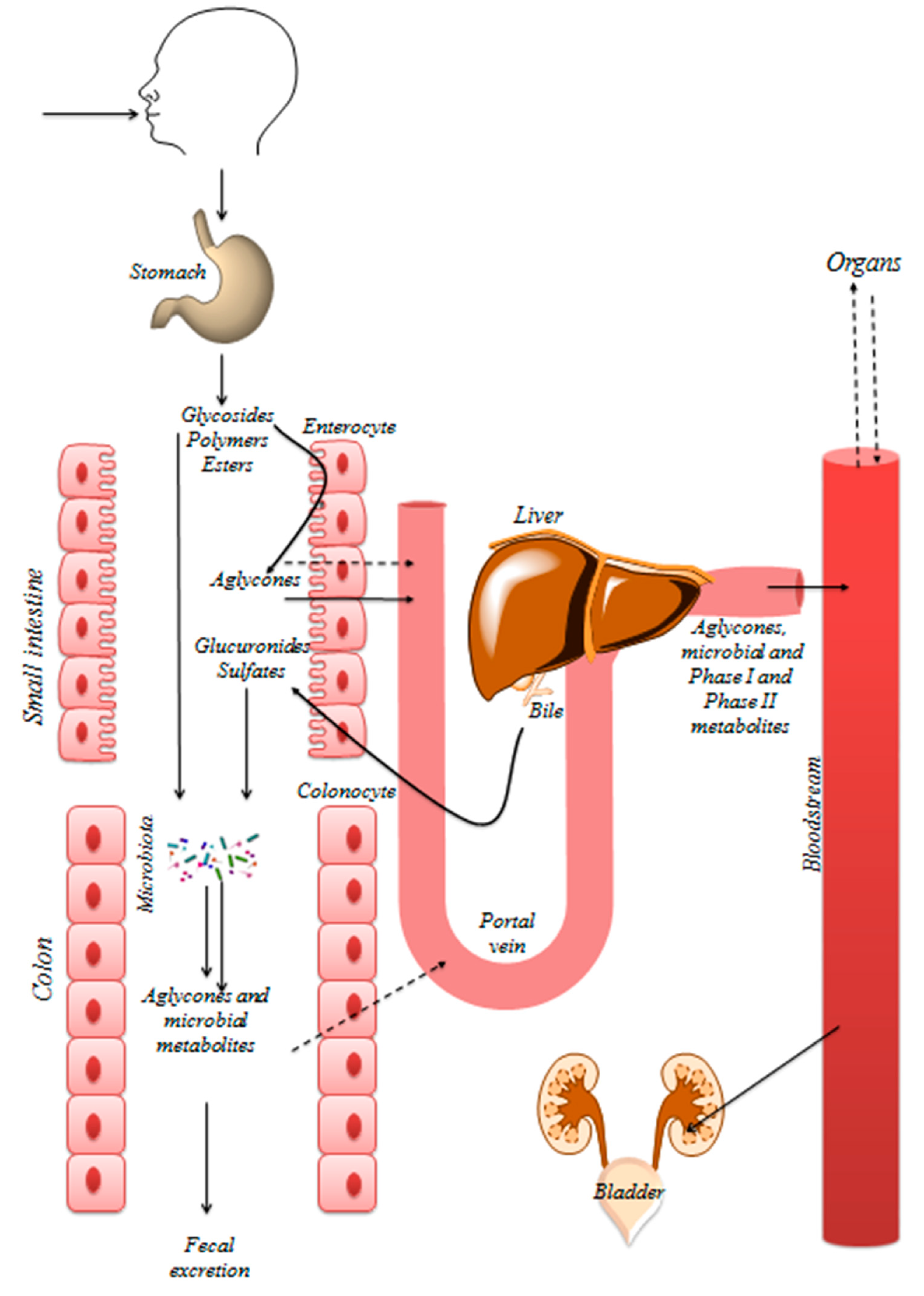 Nutrients | Free Full-Text | Dietary Polyphenols Targeting Arterial