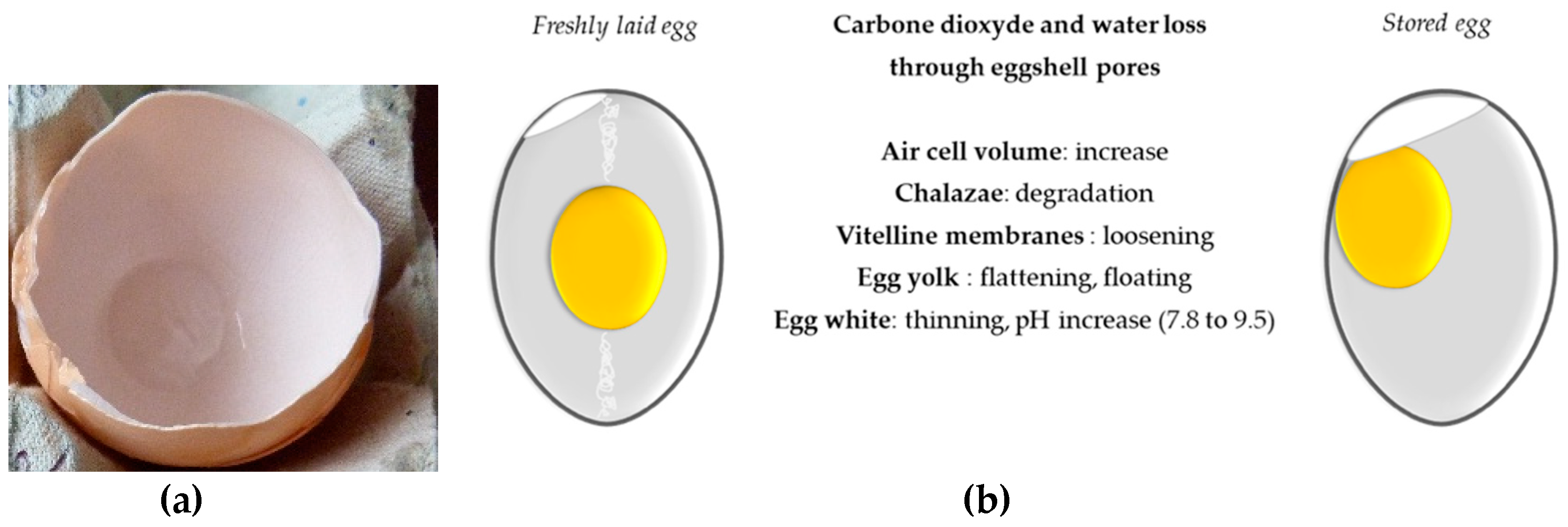 Nutrients Free Full Text The Golden Egg Nutritional Value Bioactivities And Emerging Benefits For Human Health Html