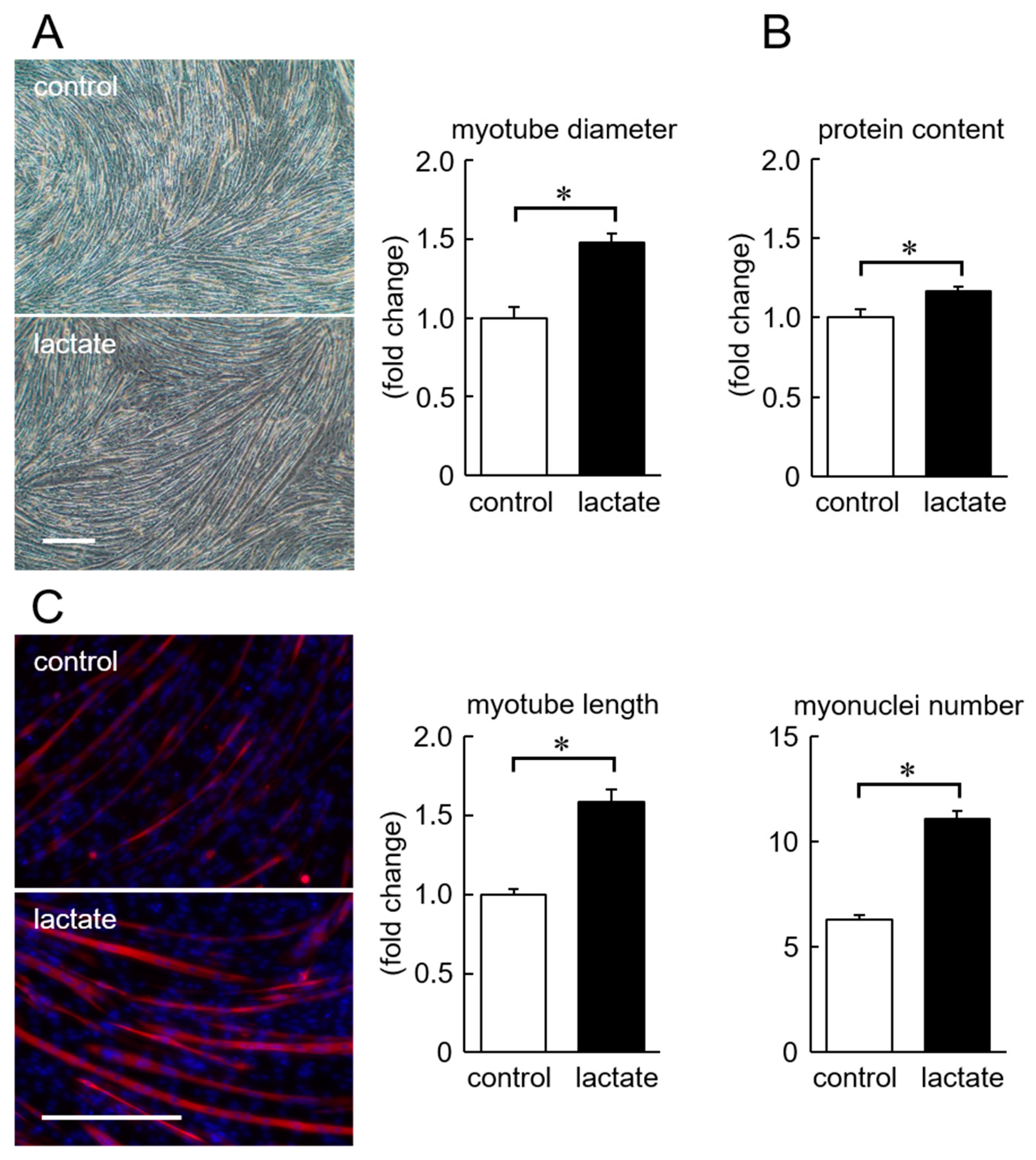 Nutrients | Free Full-Text | Lactate Stimulates a Potential