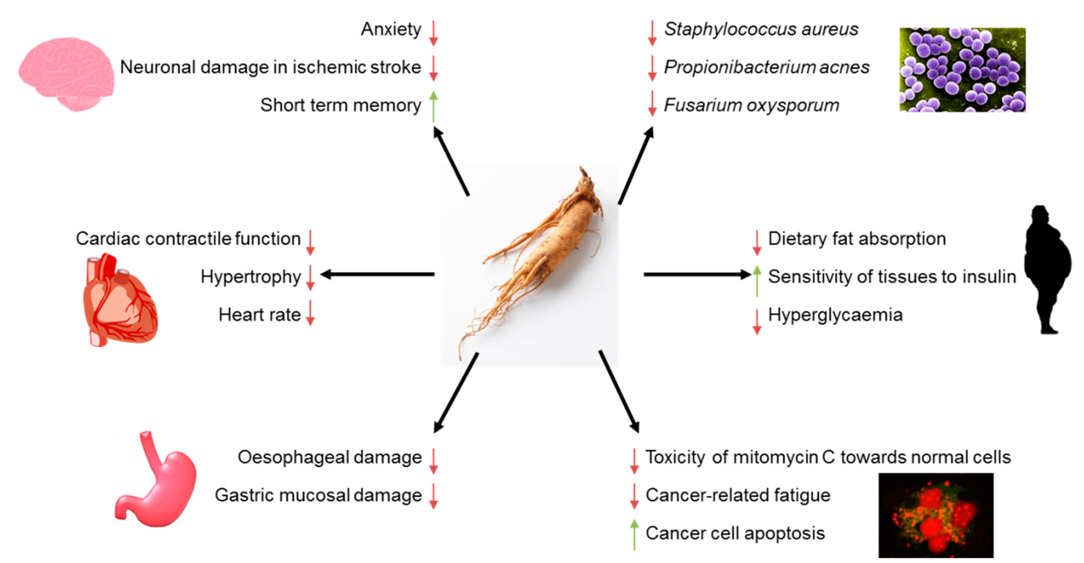 Nutrients Free Full Text American Ginseng Panax Quinquefolium L As A Source Of Bioactive Phytochemicals With Pro Health Properties Html