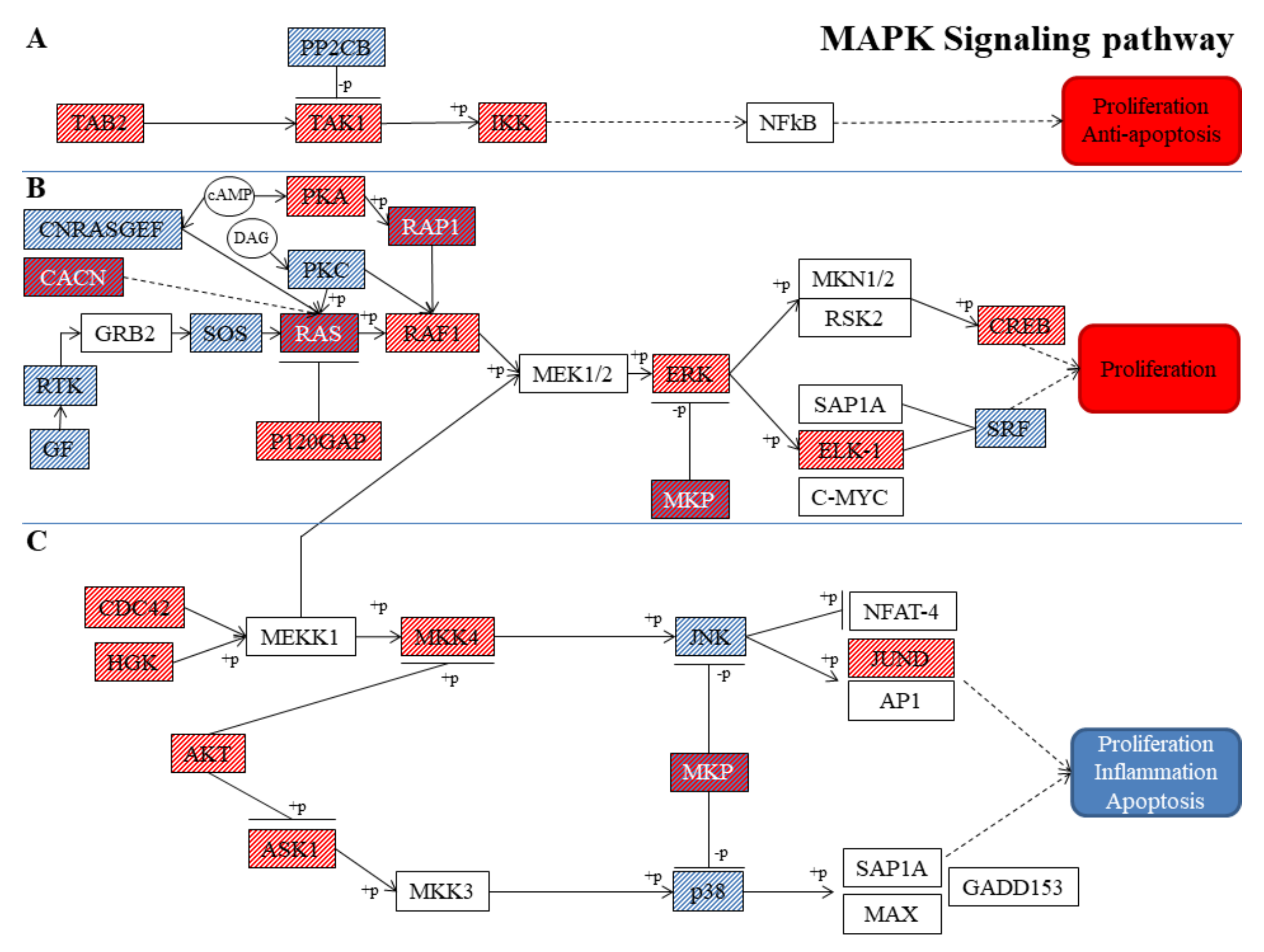 Nutrients | Free Full-Text | Transcriptomic ysis of MAPK ... on insulin pathway, cyclin-dependent kinase, il-6 signaling pathway, thyroid pathway, jak-stat signaling pathway, cell signaling, adenylate cyclase pathway, pi3k/akt/mtor pathway, phosphatidylinositol 3-kinase pathway, receptor tyrosine kinase, wnt signaling pathway, jak 1 2 3 signaling pathway, pi 3-kinase pathway, protein kinase c, mitogen-activated protein kinase, signal transduction, tyrosine kinase, tgf beta signaling pathway,