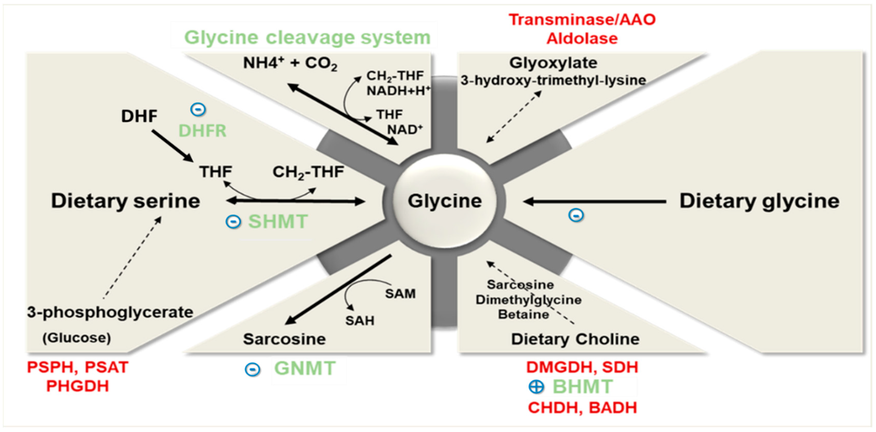 Nutrients | Free Full-Text | Glycine Metabolism and Its